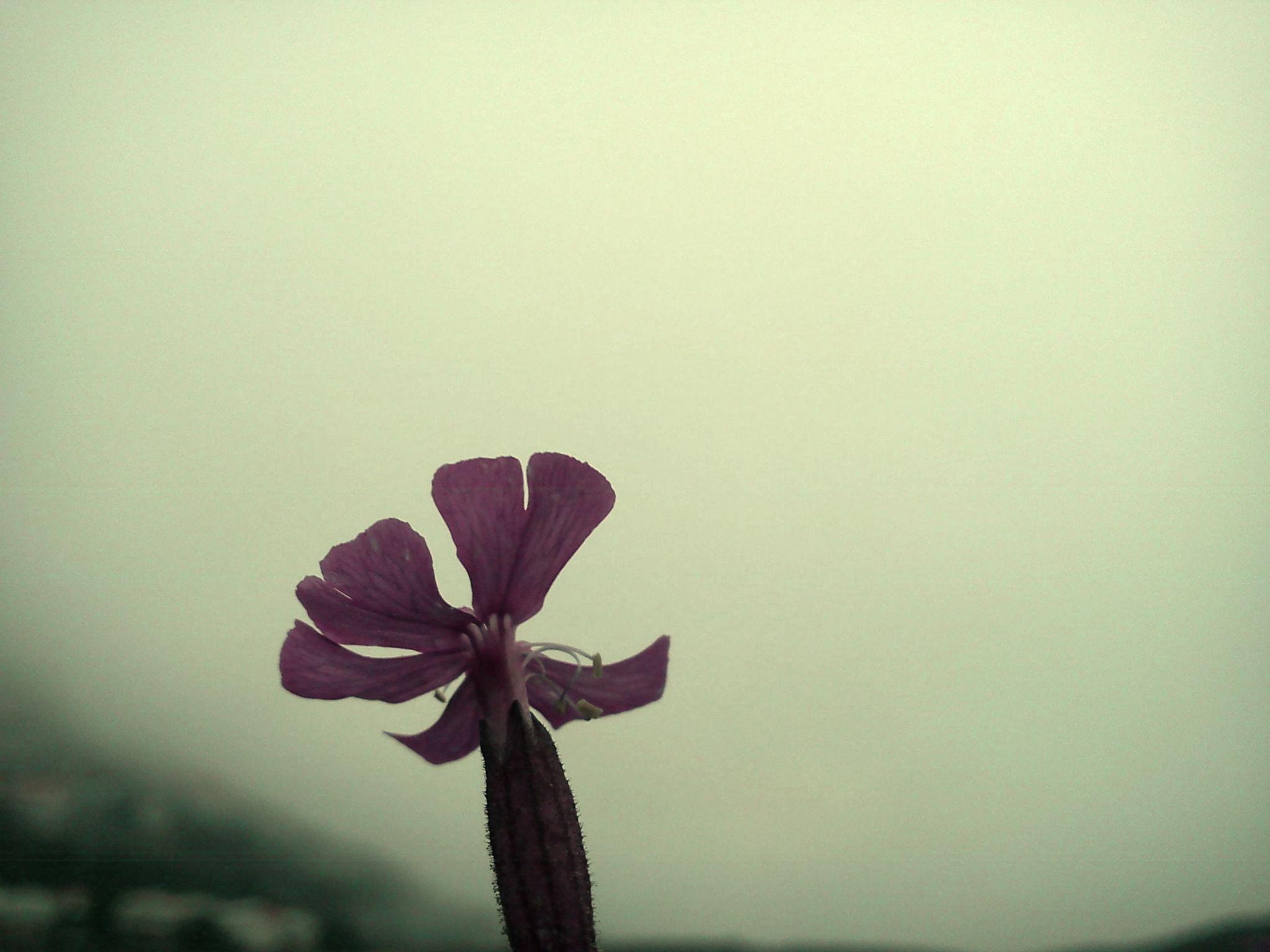The Flower by Ali Amirifar
