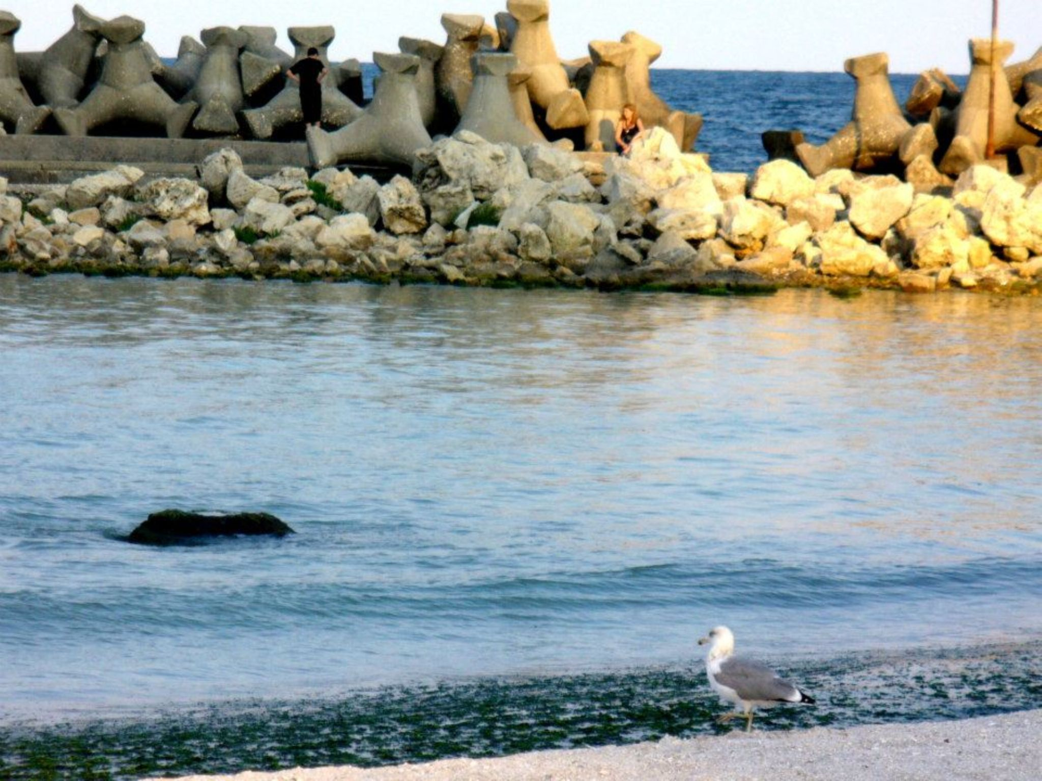 sea by roxana sabau