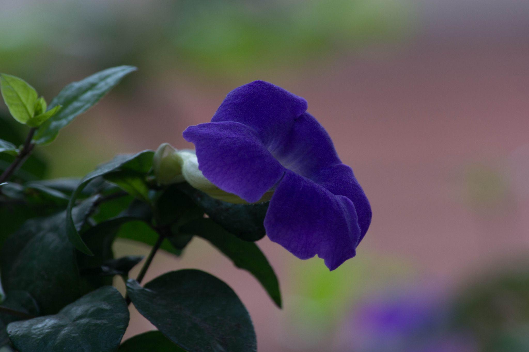 Blue Autumn by joyman.xavio