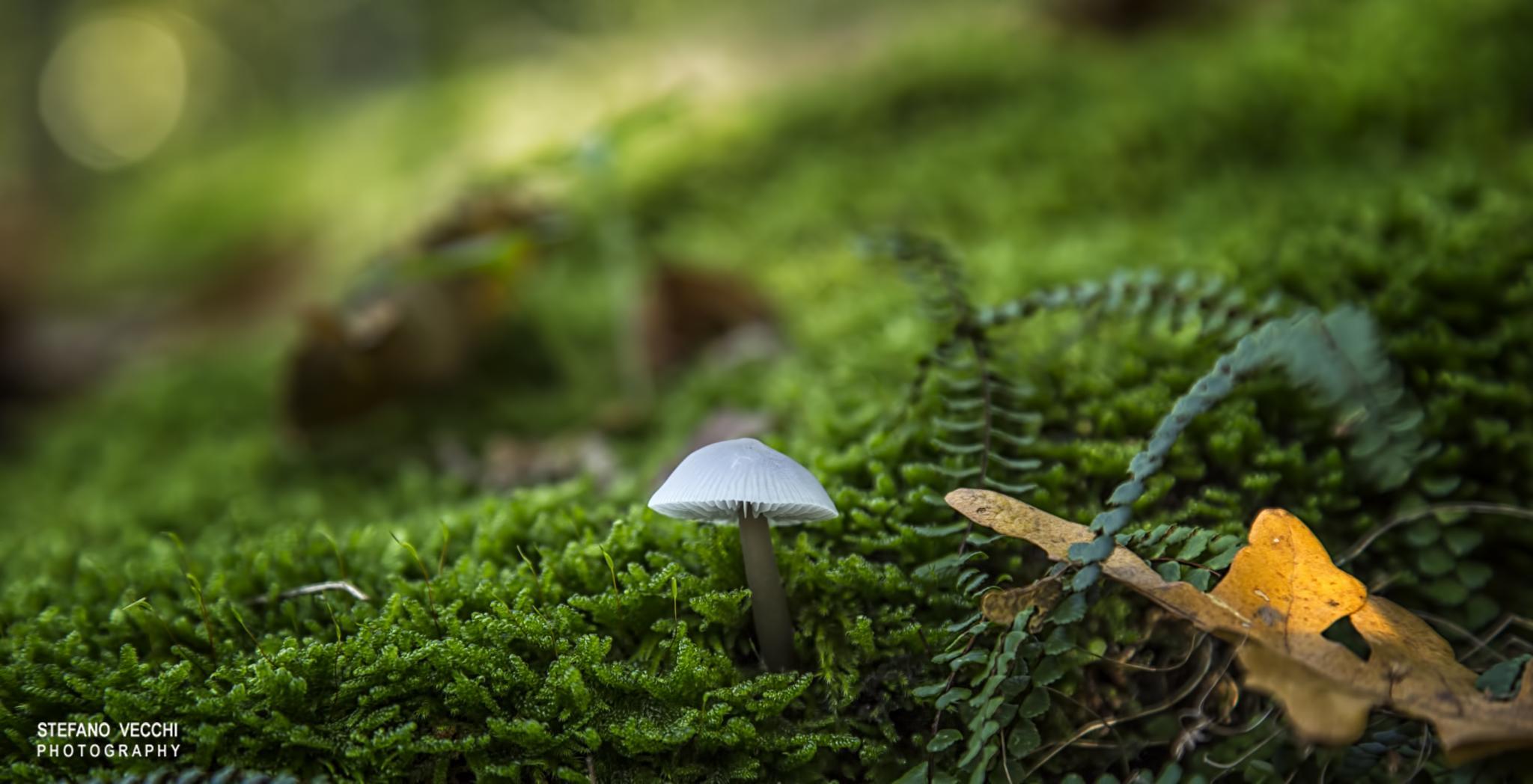 Mushroom solitary.... by stefano.vecchi.395