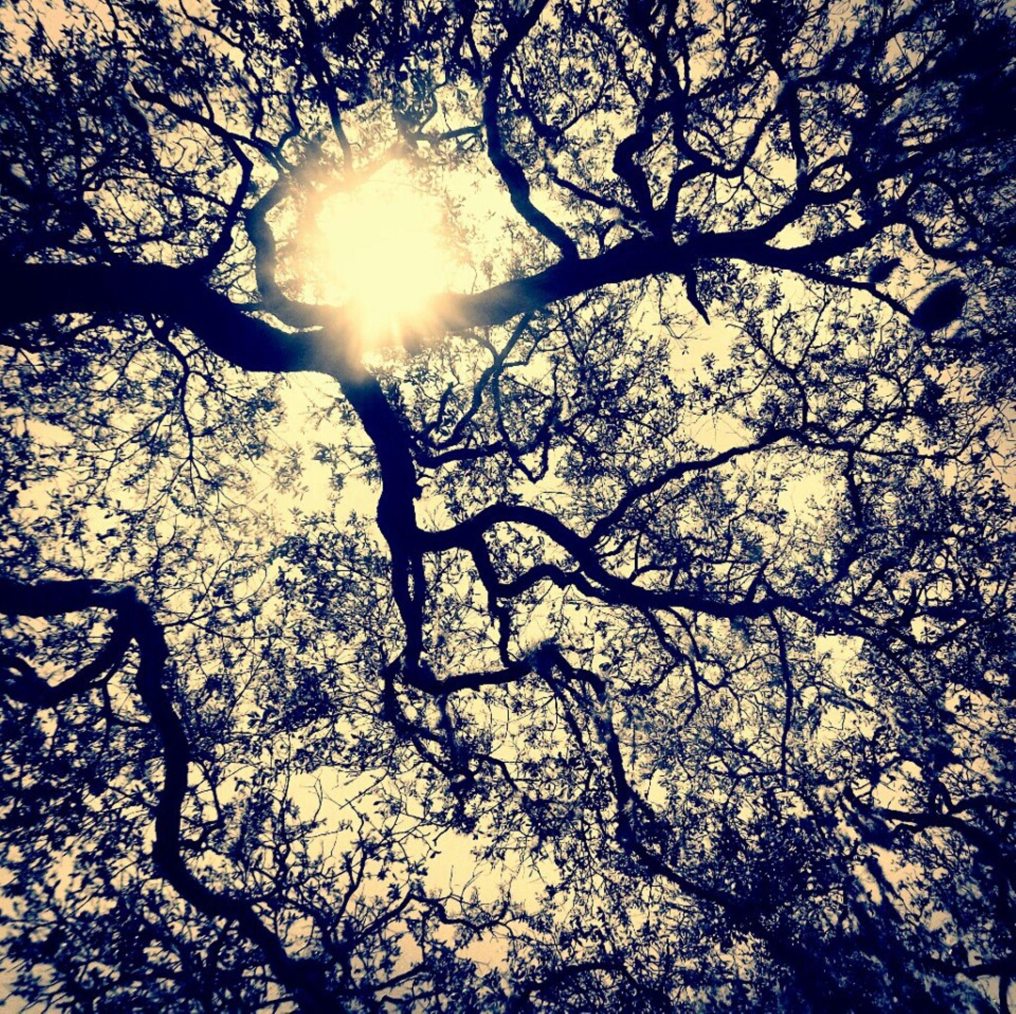 Trees 2 by Chelsey Elizabeth