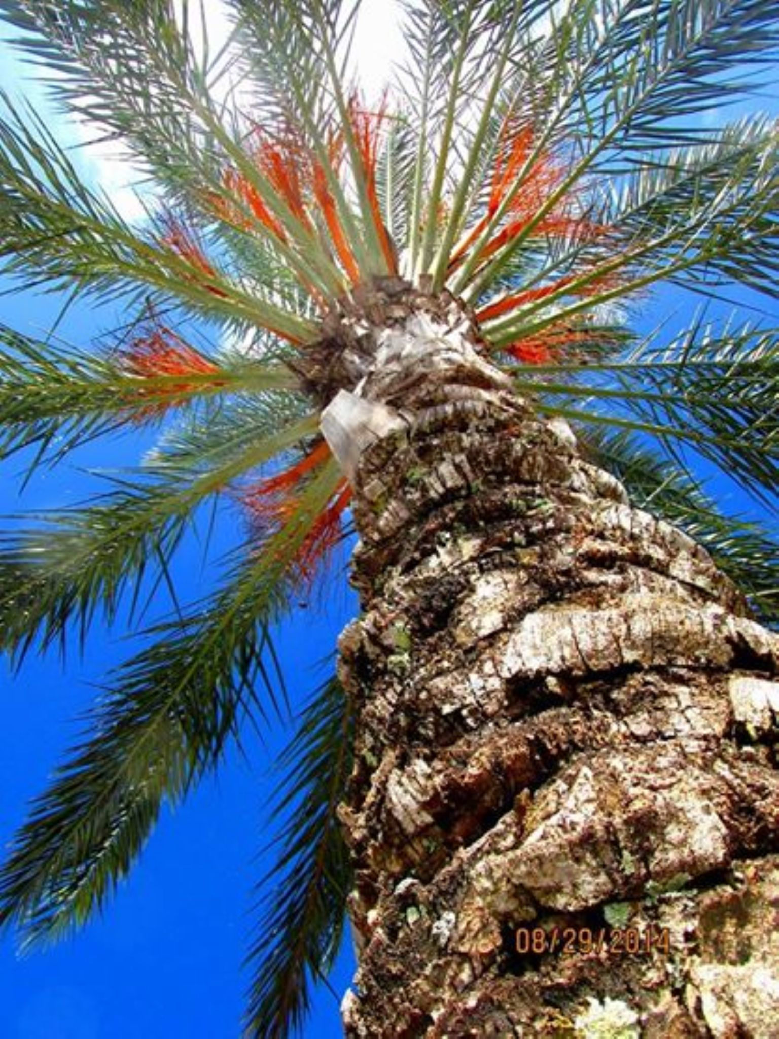 Florida Palm Trees by Chelsey Elizabeth