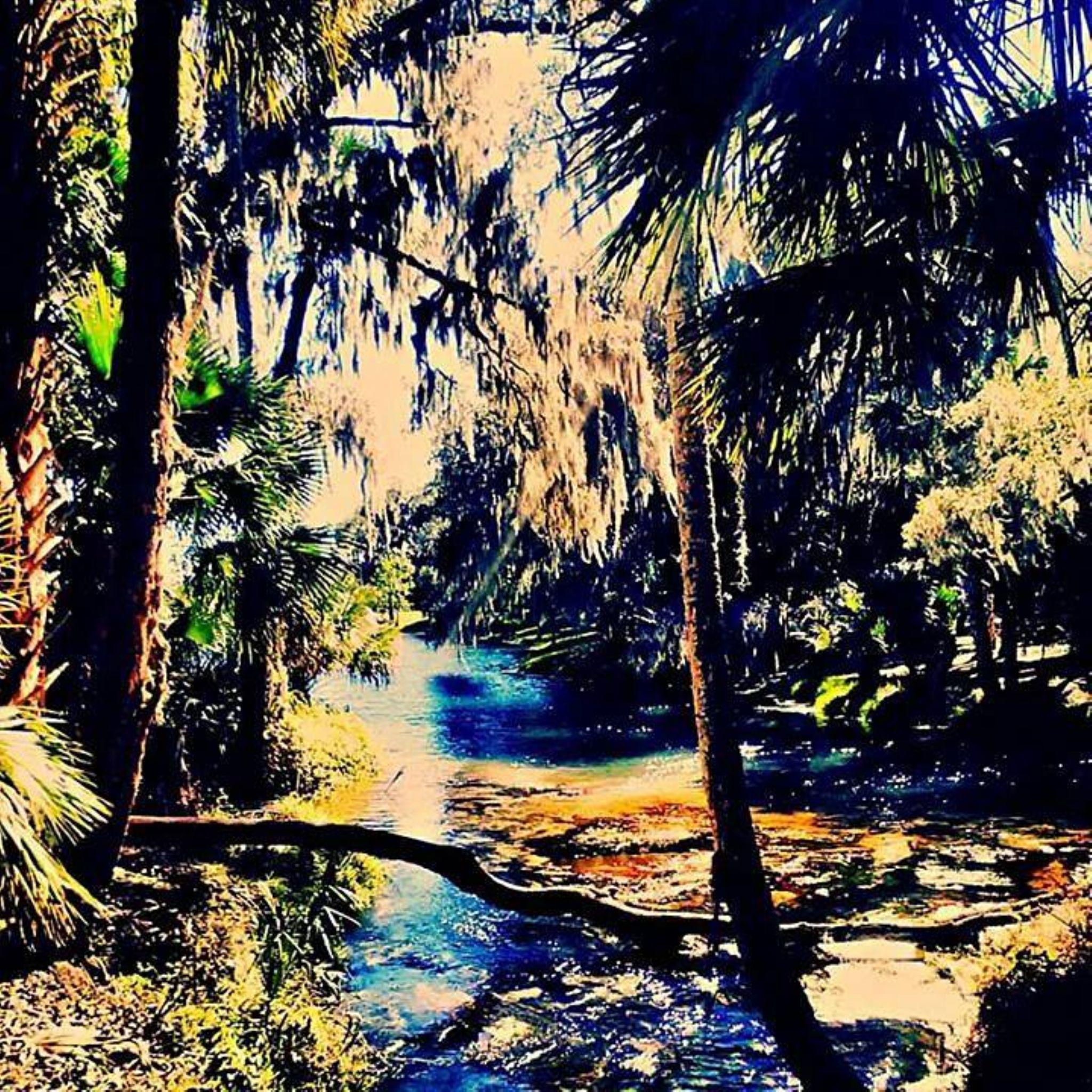The Springs. by Chelsey Elizabeth
