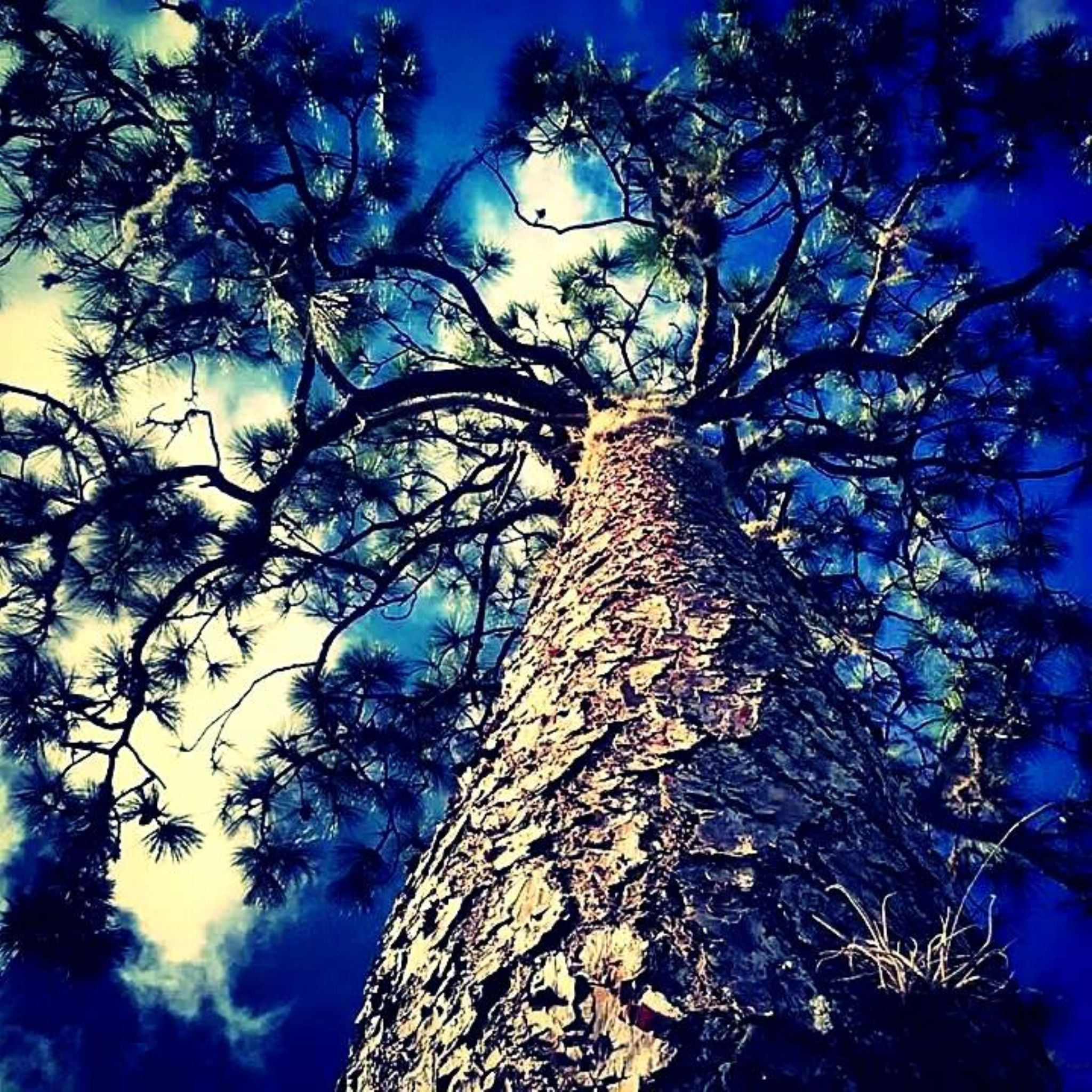 Different view of a tree by Chelsey Elizabeth