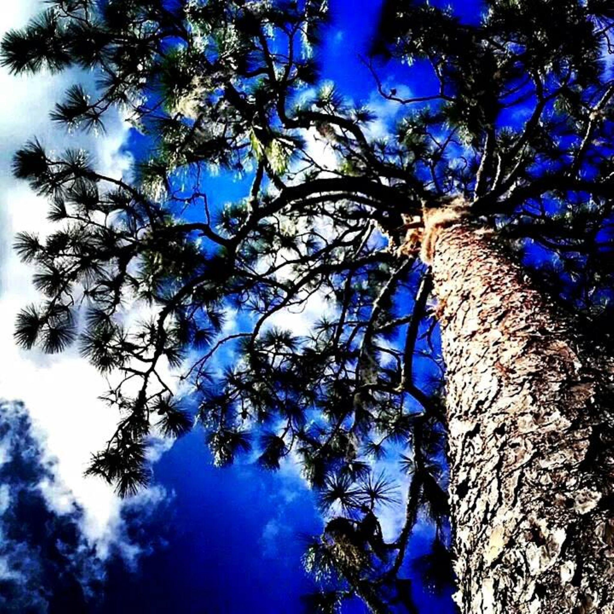 Tree View! by Chelsey Elizabeth