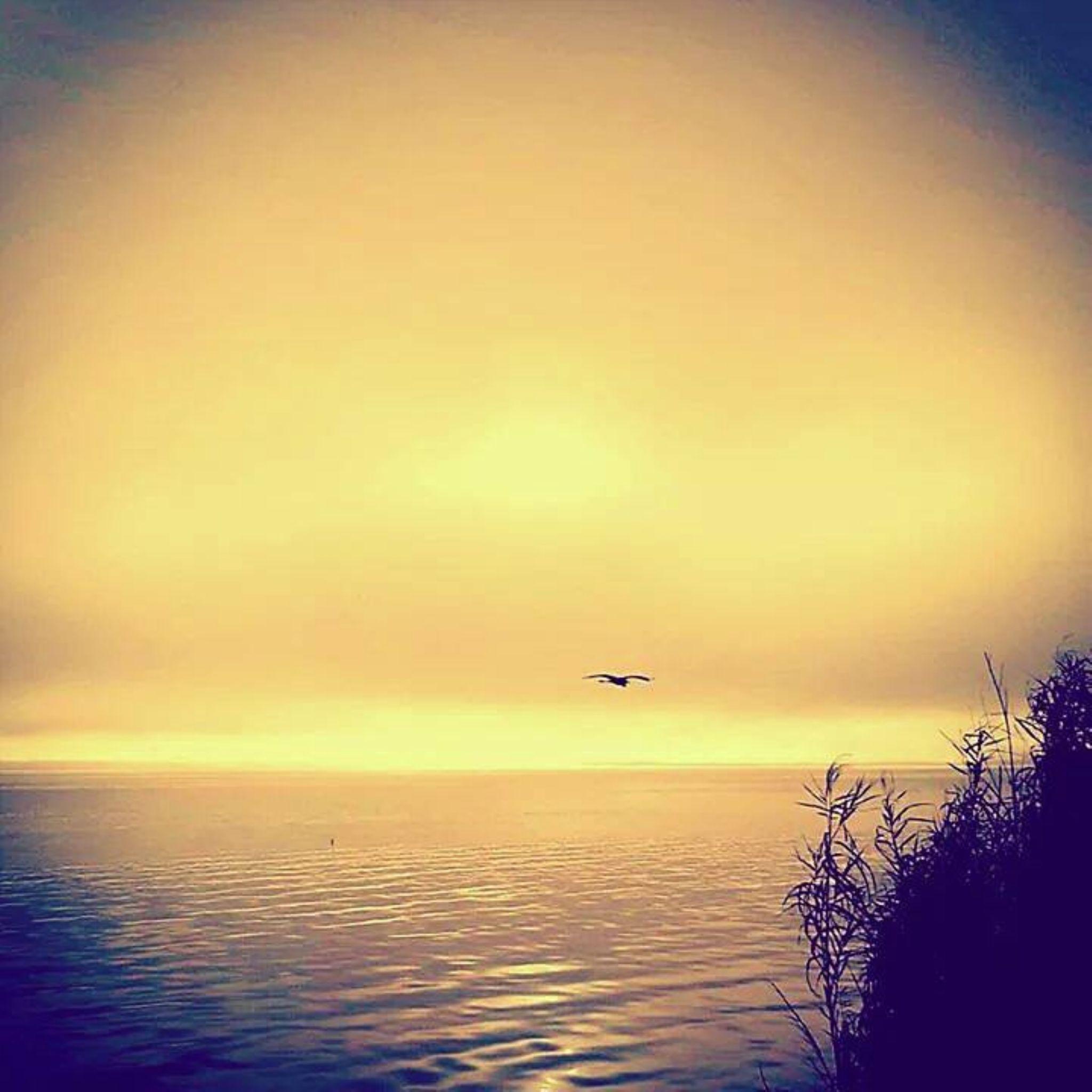Flight. by Chelsey Elizabeth