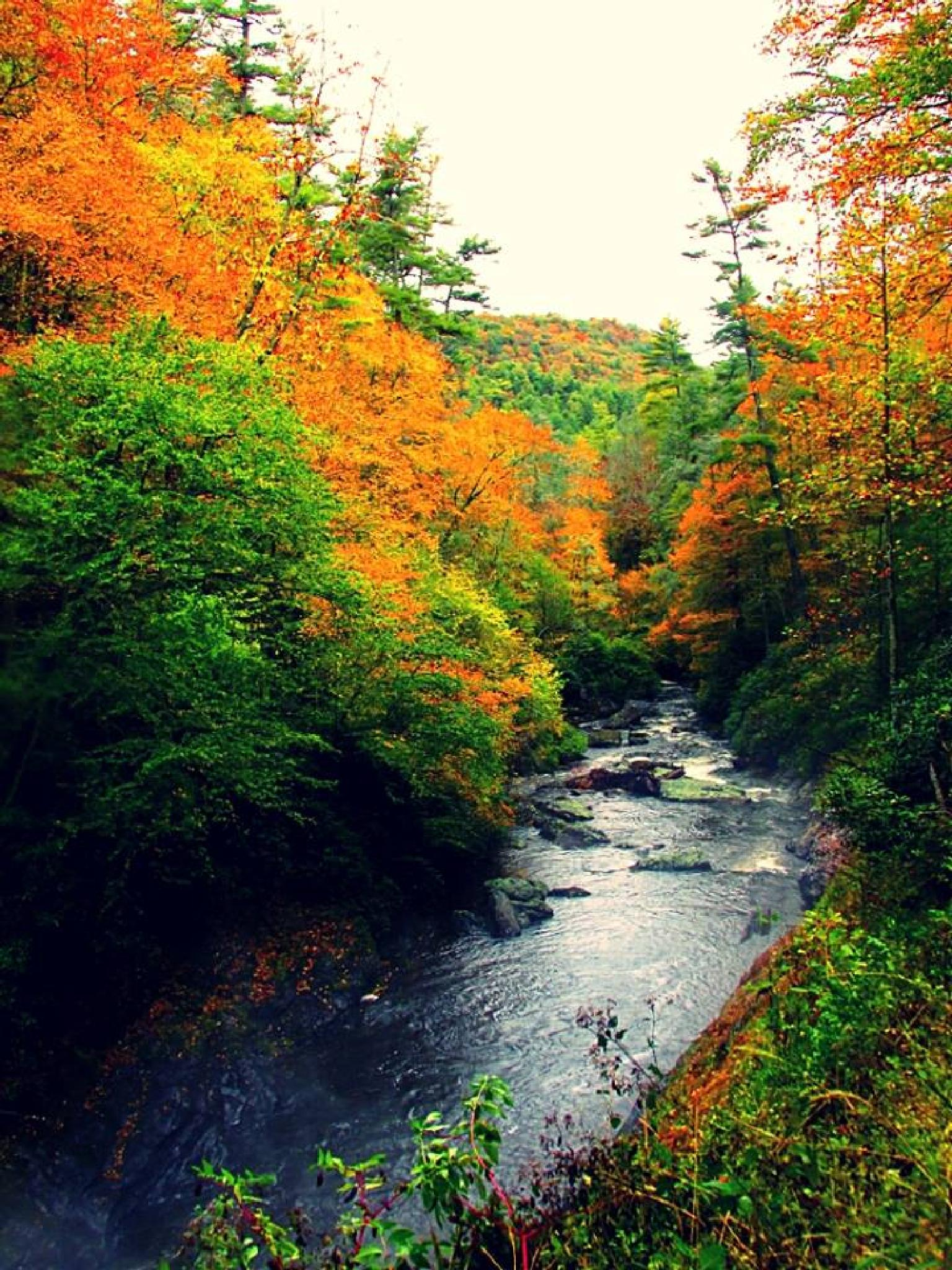 the creek after the fall by Chelsey Elizabeth