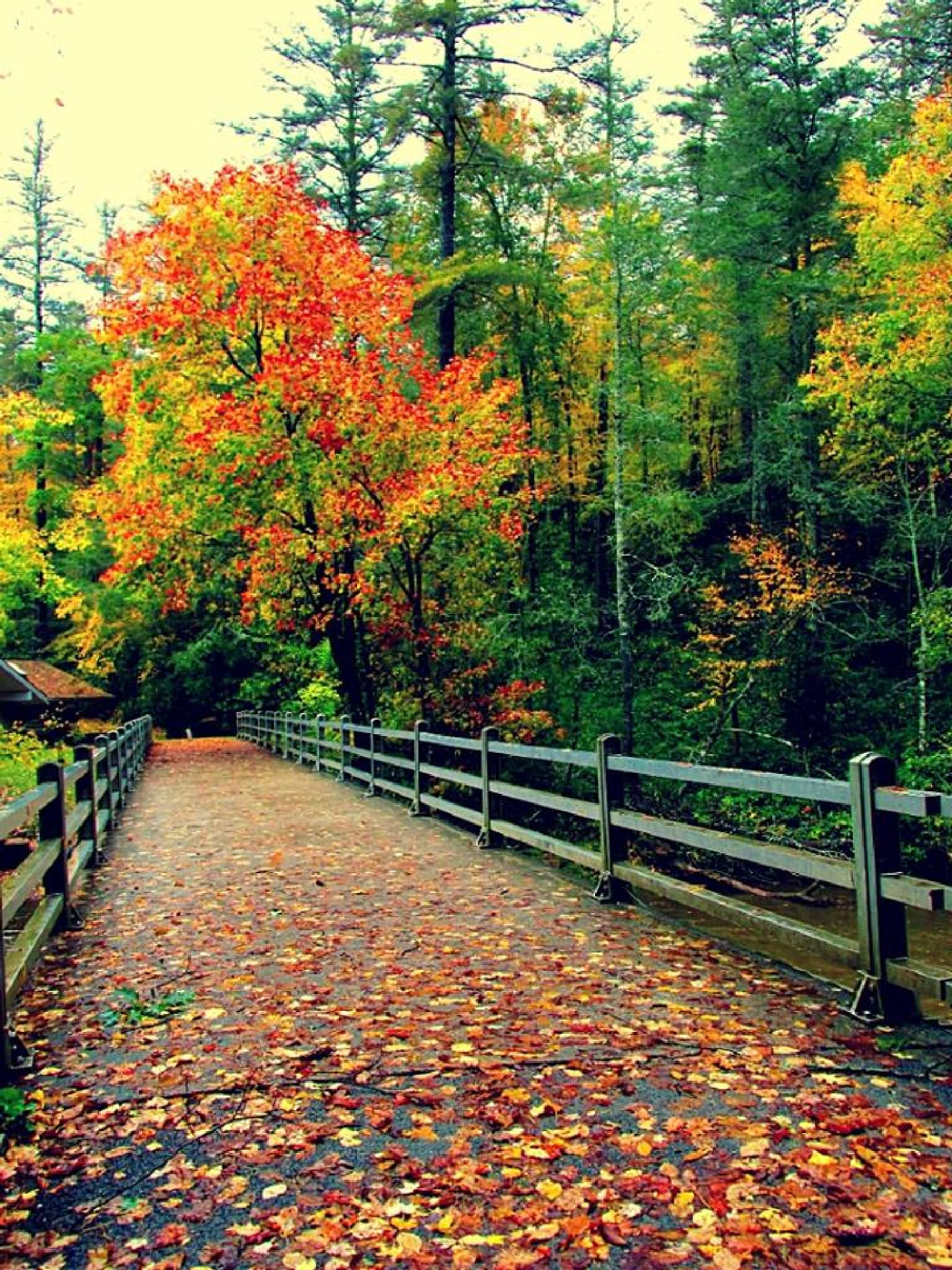 Trail to Linville Falls 2. by Chelsey Elizabeth
