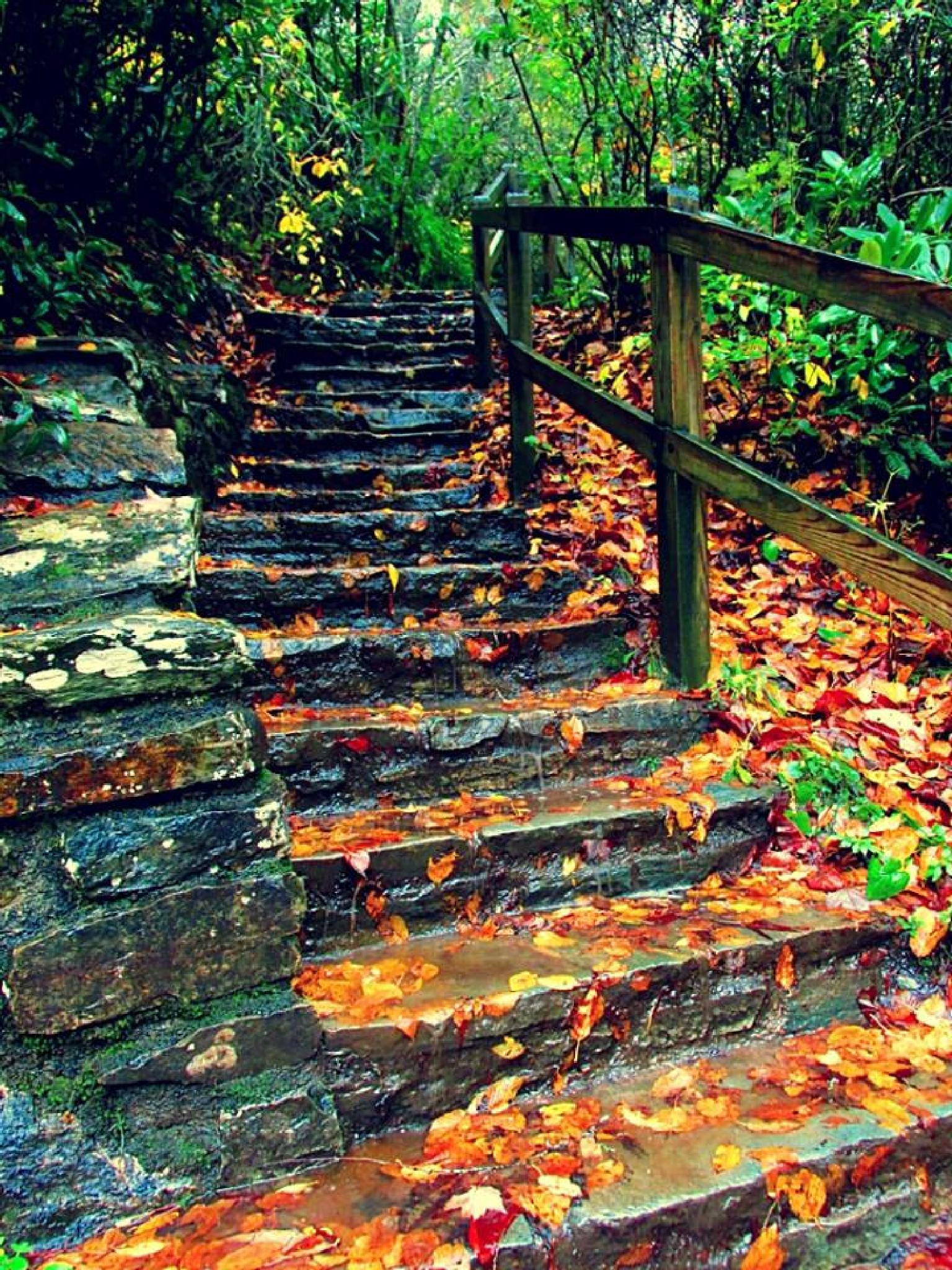 Staircase to Linville Falls. by Chelsey Elizabeth