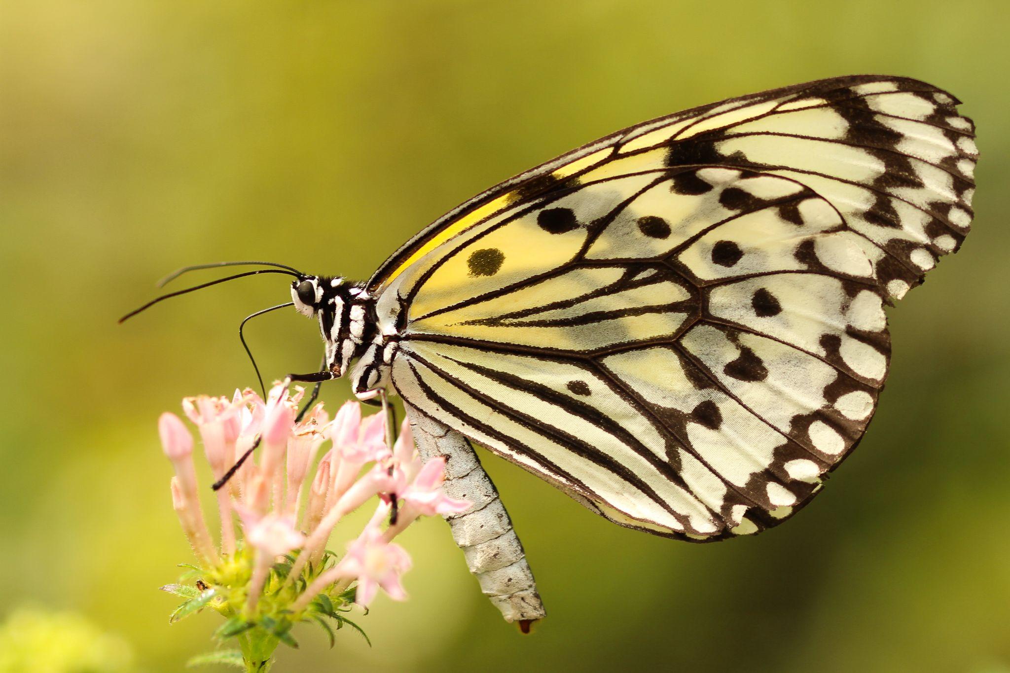 The new butterfly season by boris.smokrovic