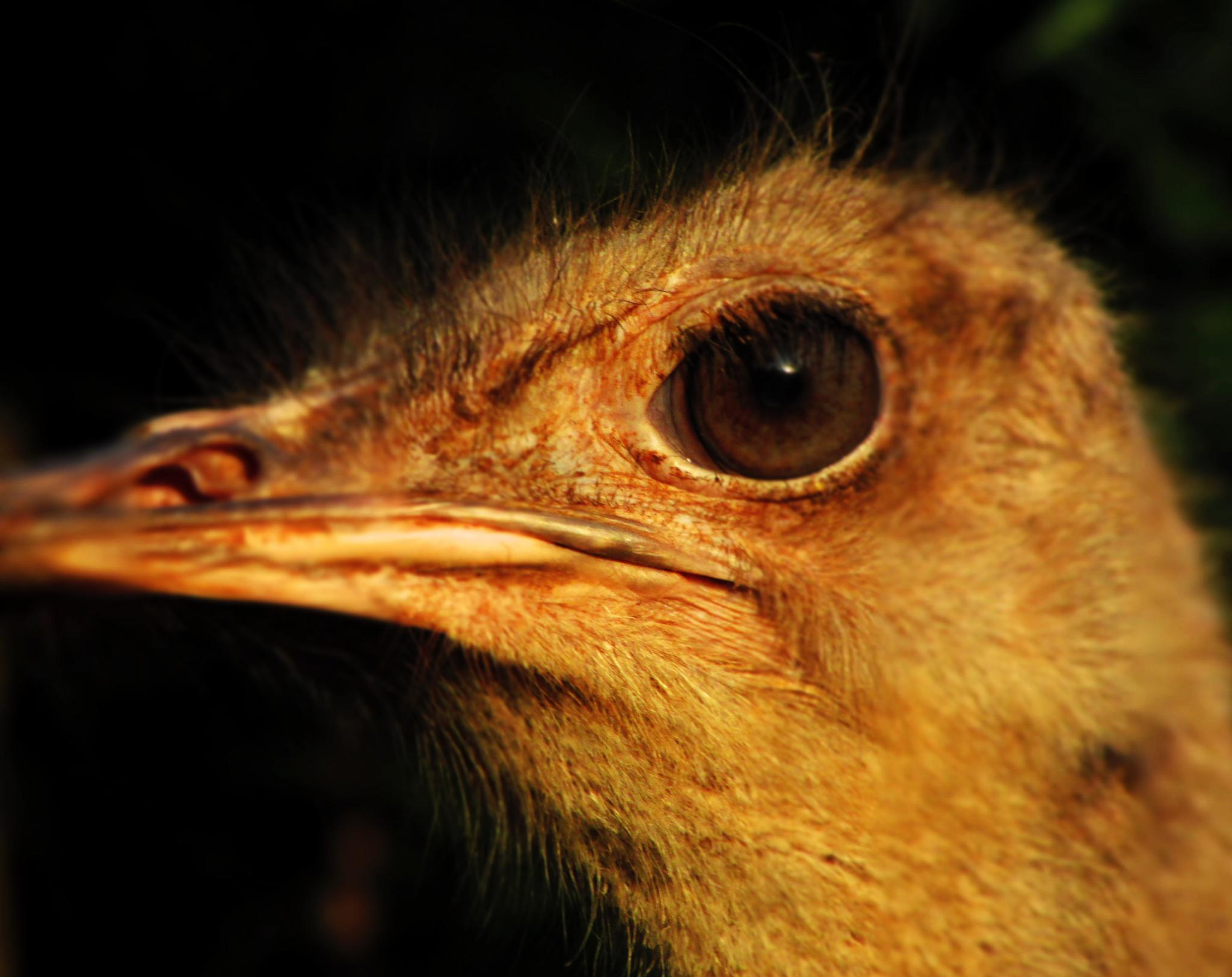 Ostrich's Eye by Axelle