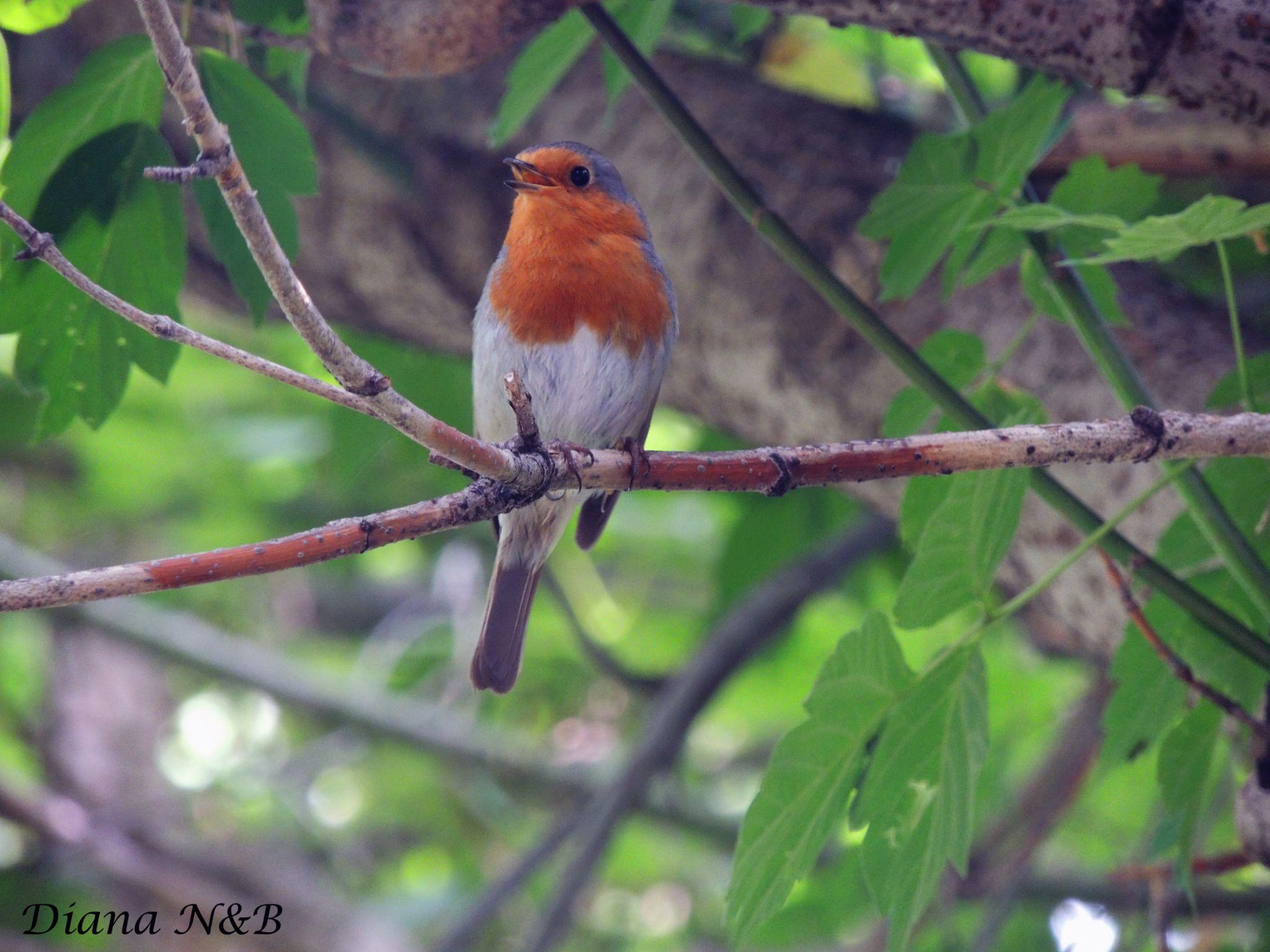 Bird by diana.adamyan.12