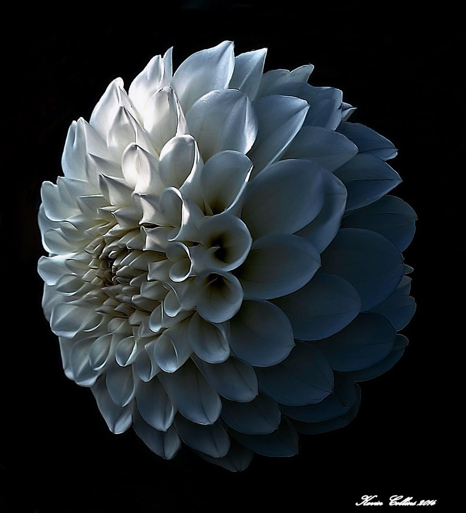 Bloom. by kevin.j.collins.92