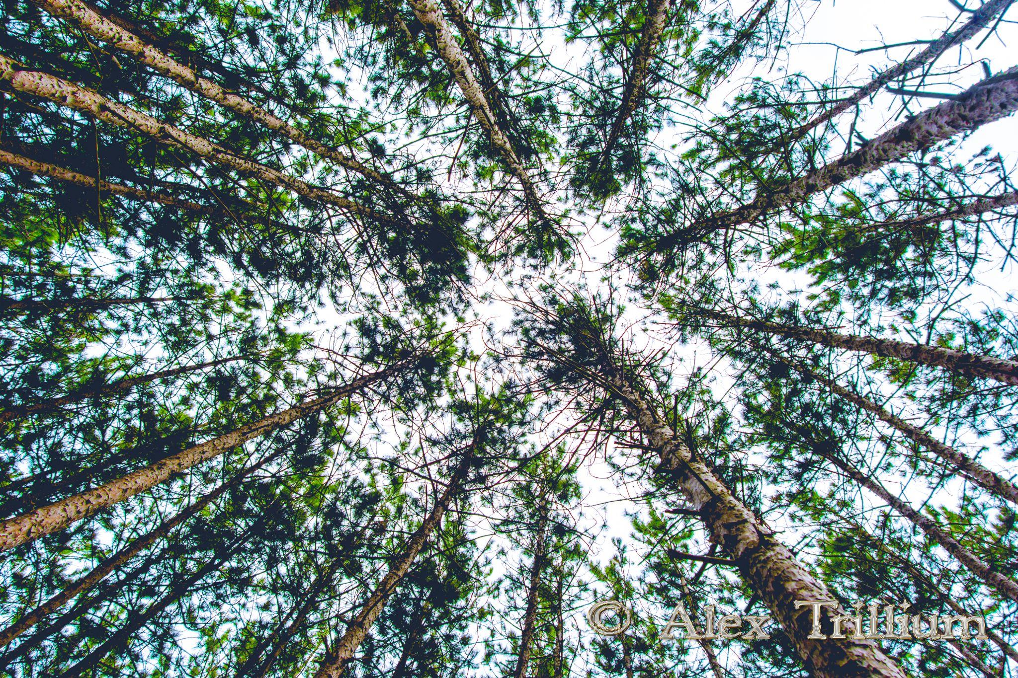 Cedar Valley by AlexTrillium