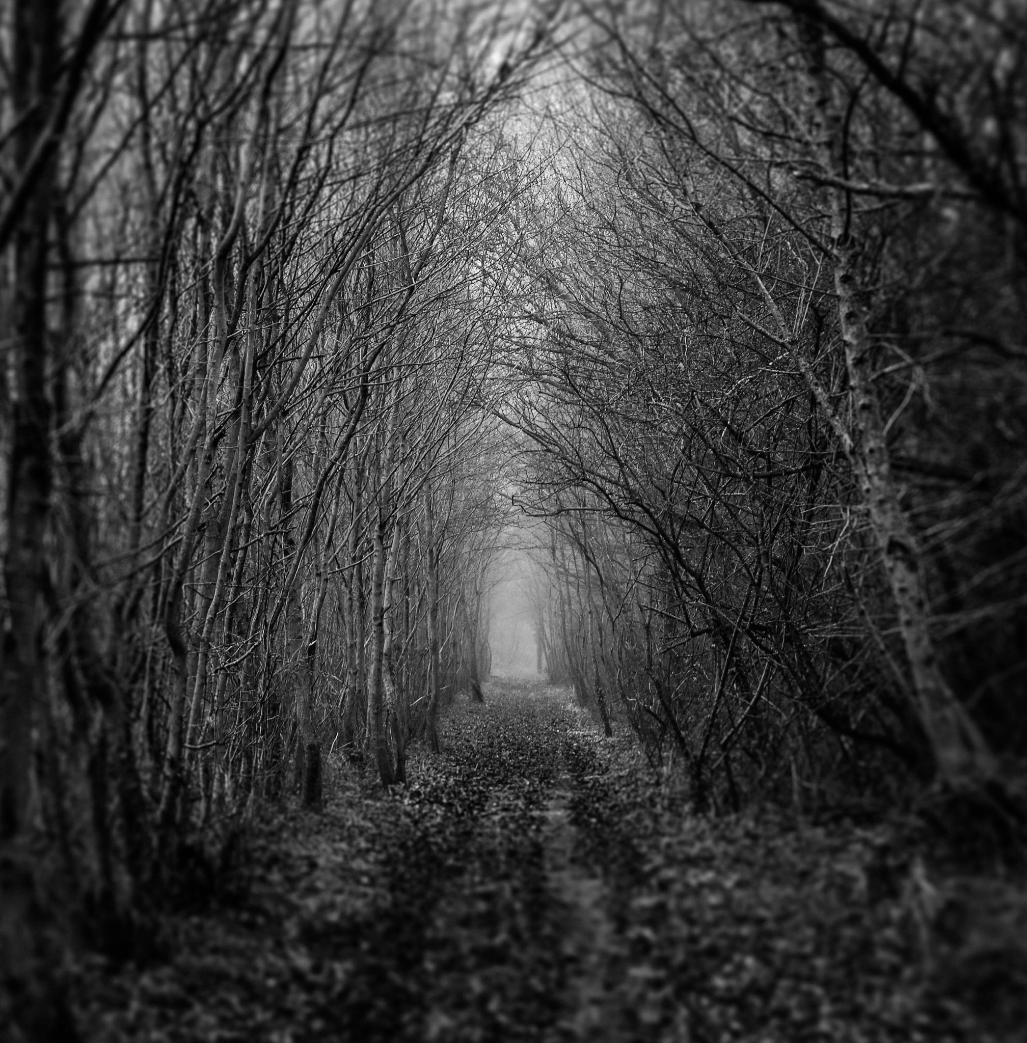 chemin mystique by willpatier