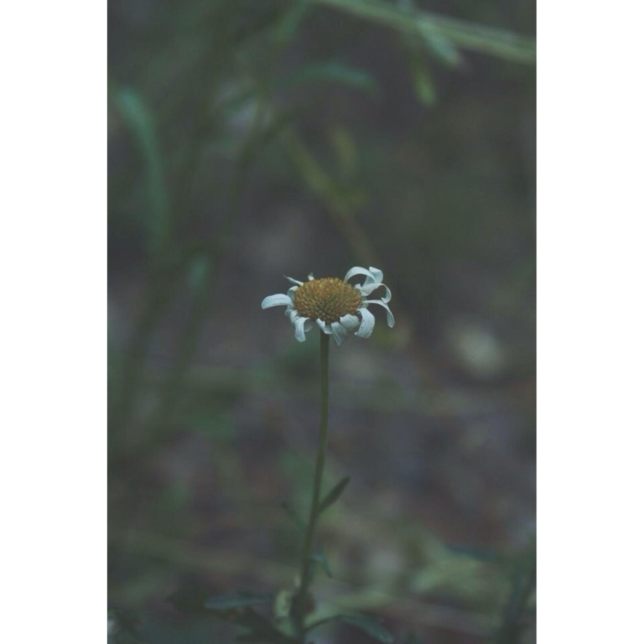 The Lonely Flower by Tessah Belcher