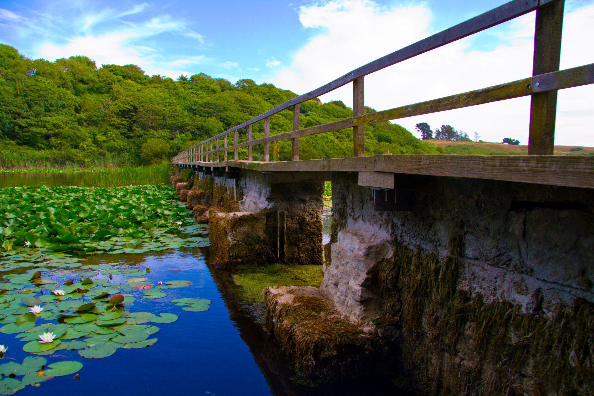 Bridge across the lake Bosherston lilly ponds by darron.sandell