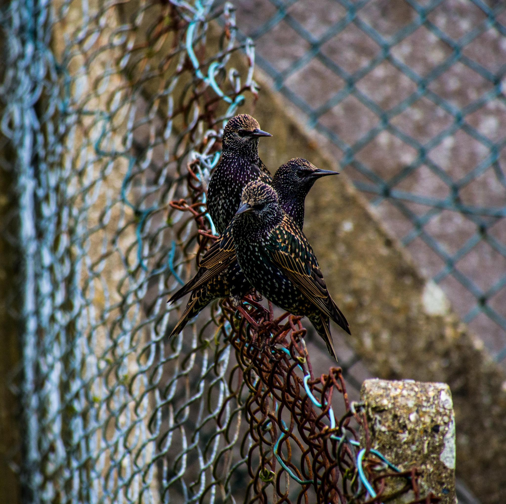 Sitting on the fence by darron.sandell