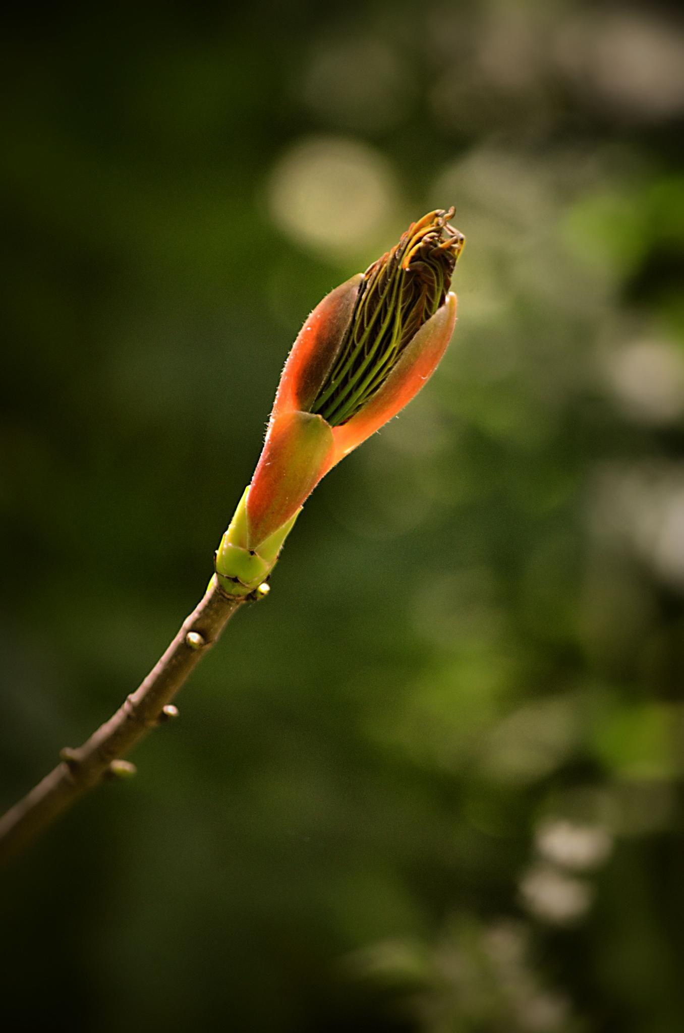 spring's coming by barry.vandelaar