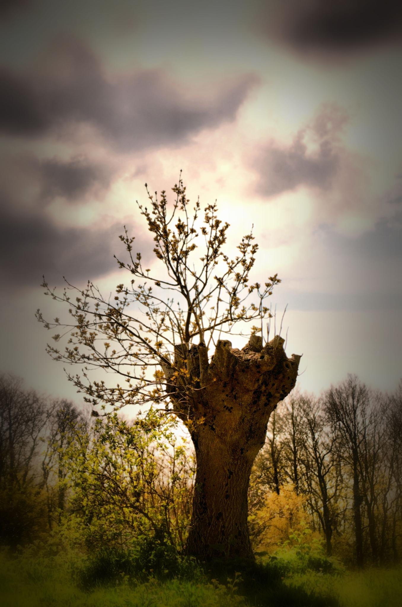 Photo in Nature #nature #landscapes #trees