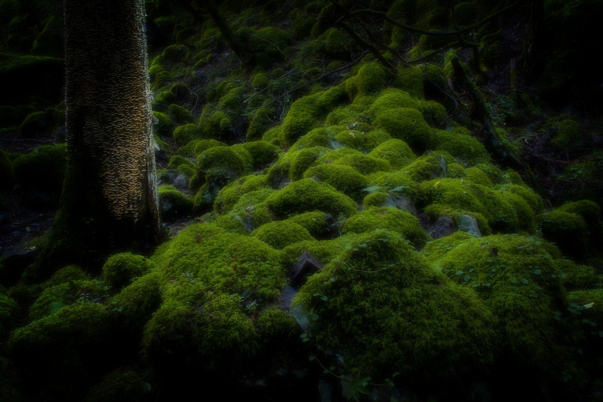 To among the moss by Koji Ishimoto