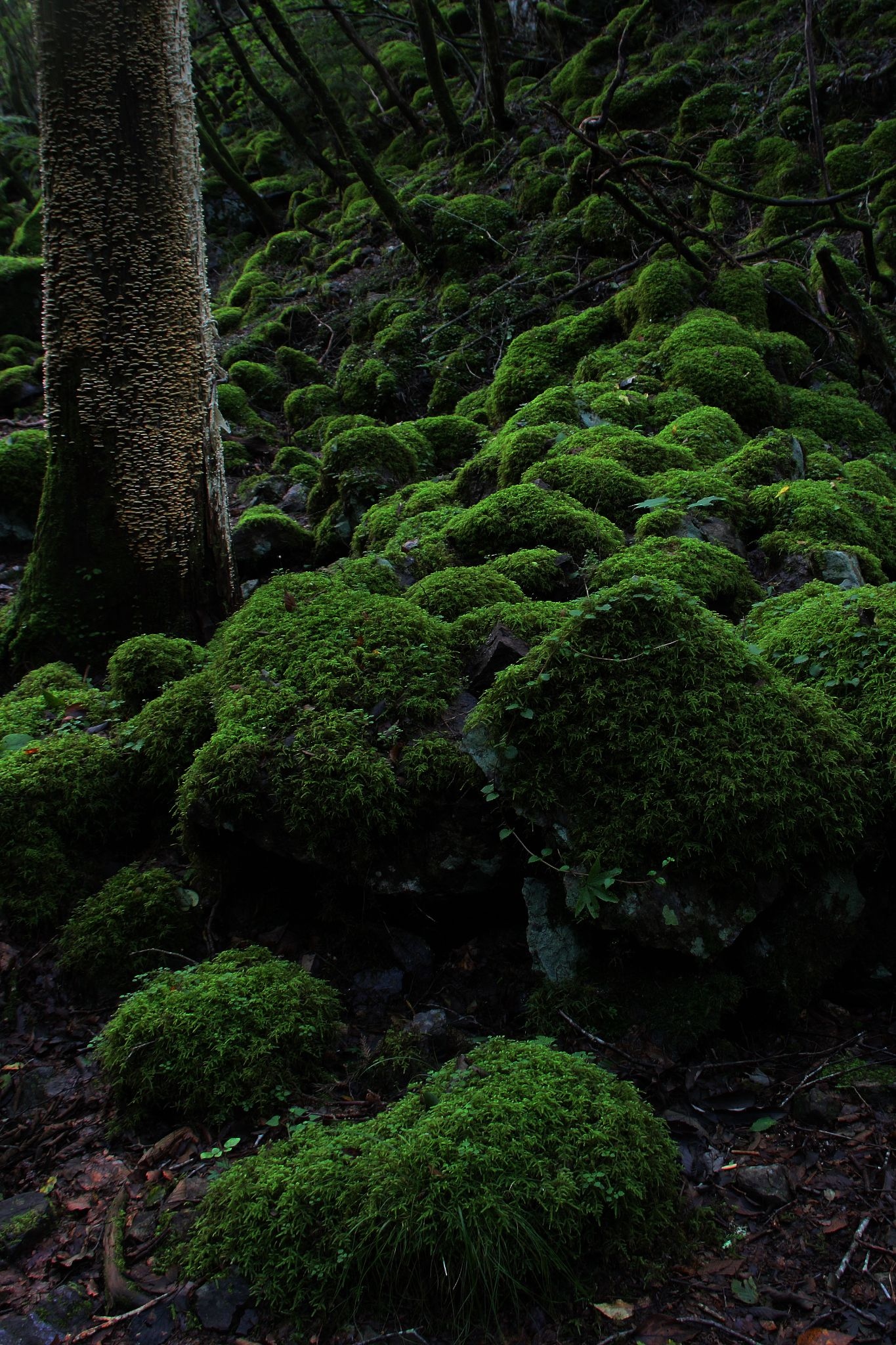 To among the moss by Koji Ishimoto