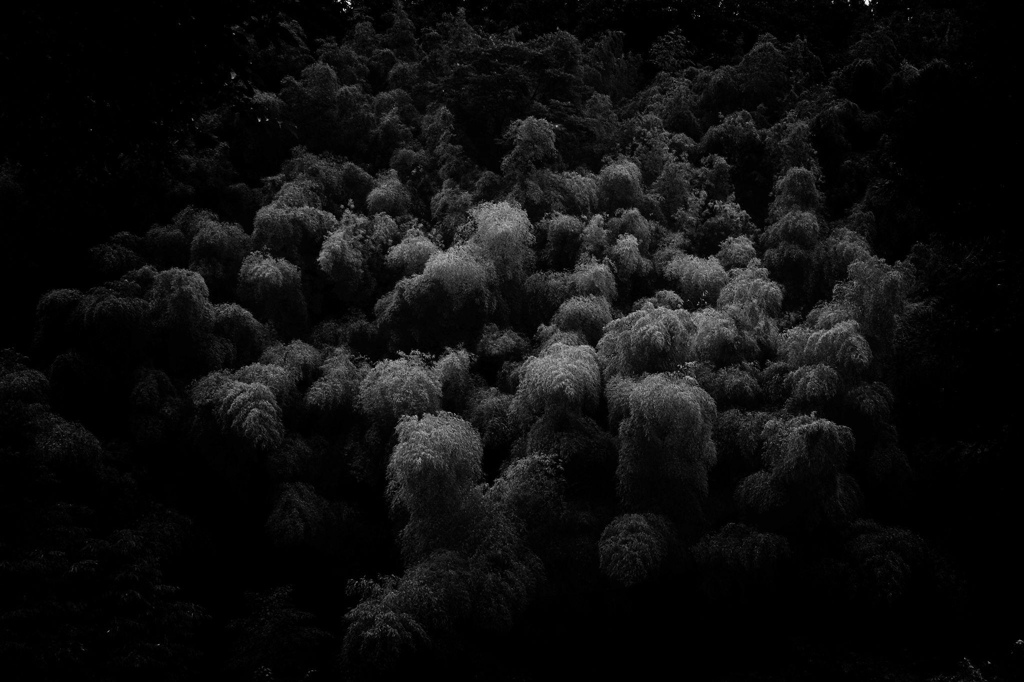 Bamboo forest by Koji Ishimoto