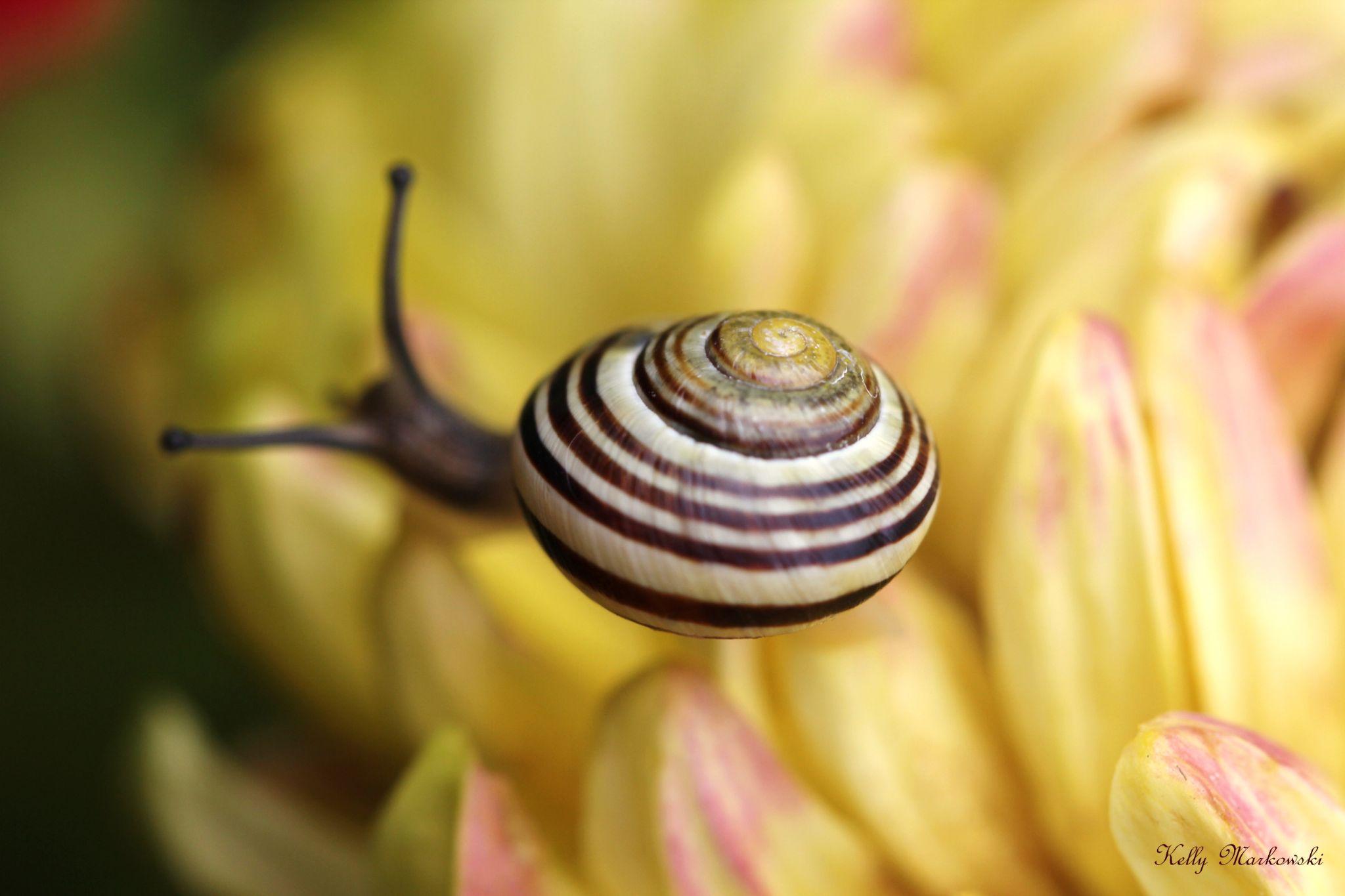 Swirl by kelly.markowski.7