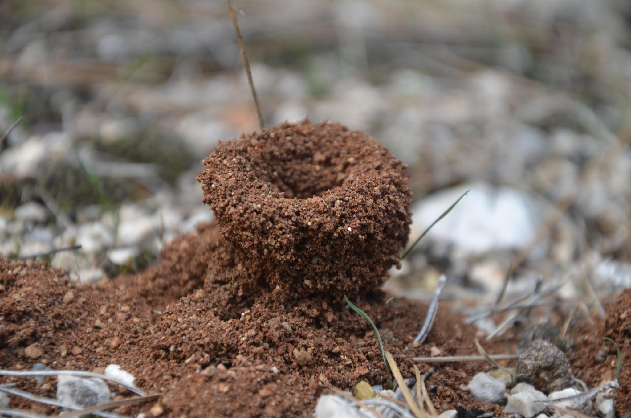 Karınca yuvası # anthill #animal by Sema Ünlü Özden