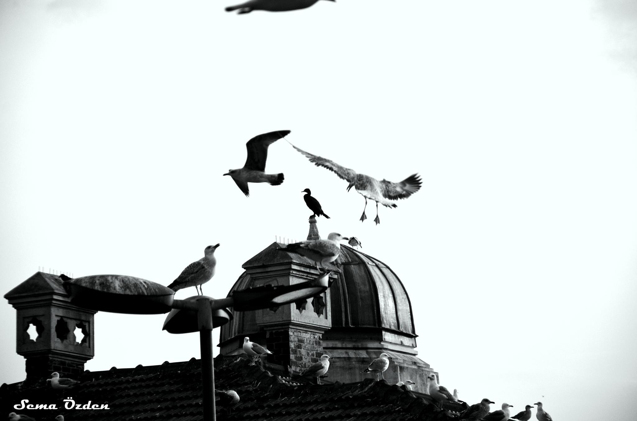 Martı#seagull by Sema Ünlü Özden