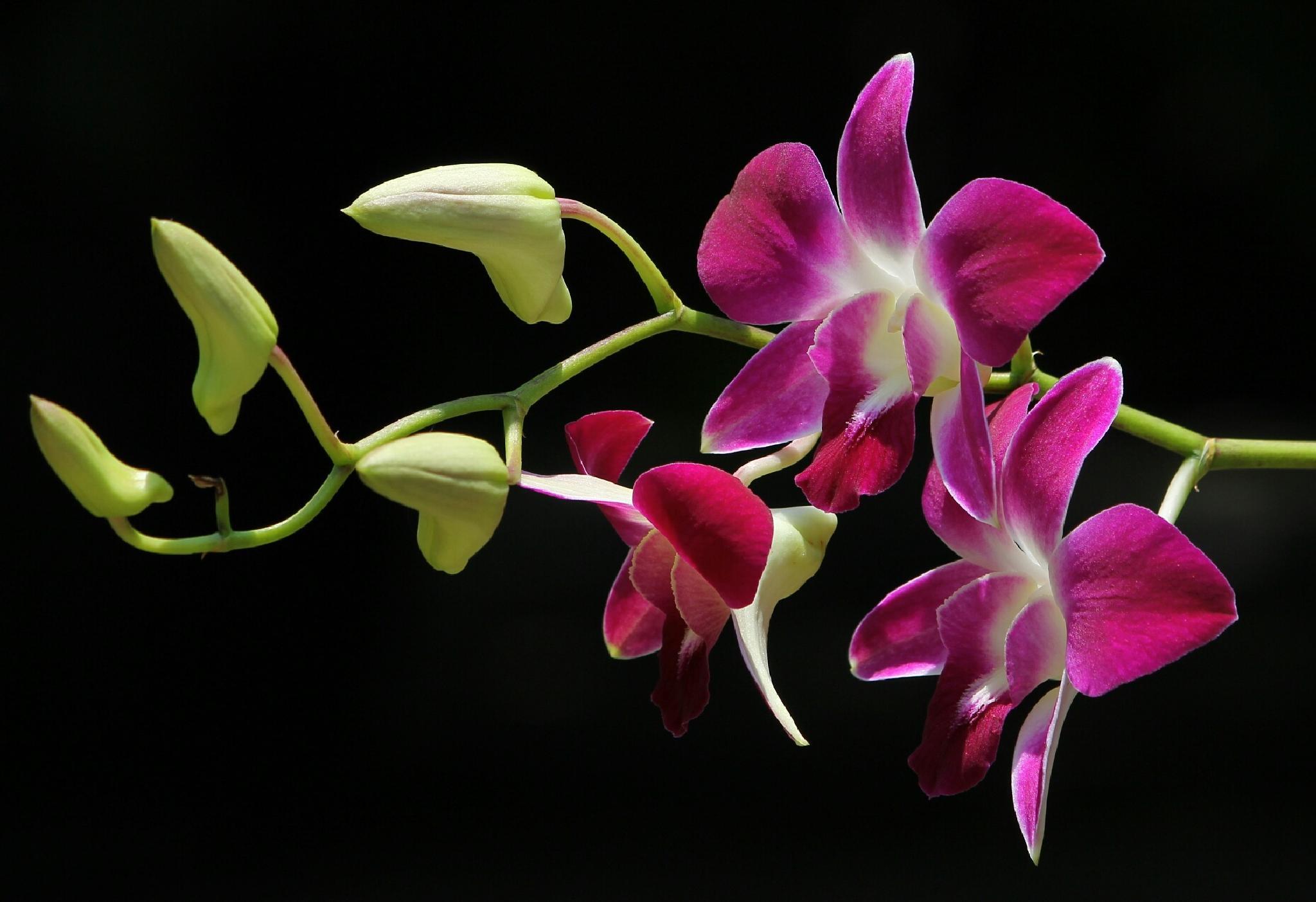 flower by Saefull.Regina