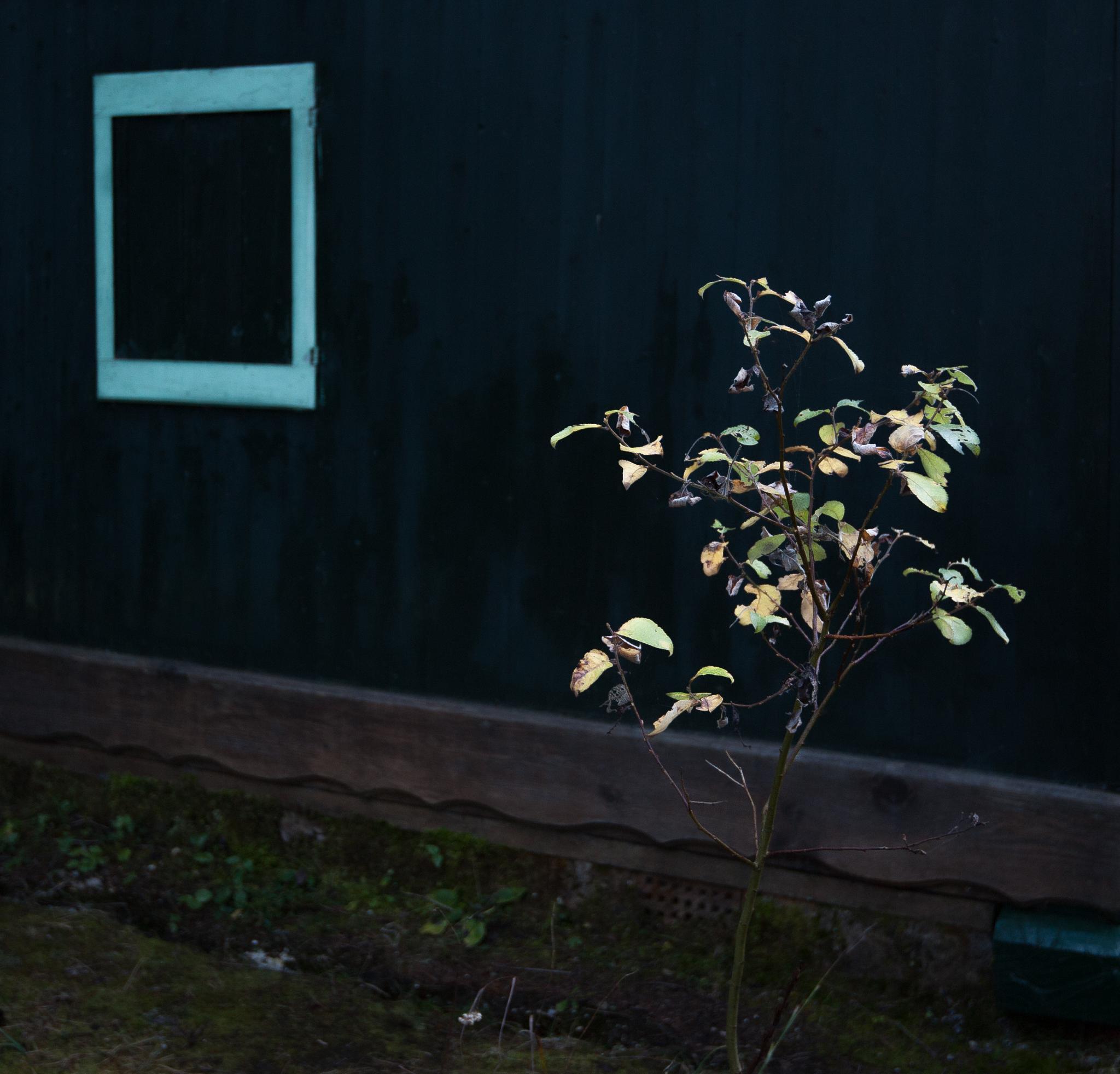 turn on the dark lights by Nicola Bortolamedi