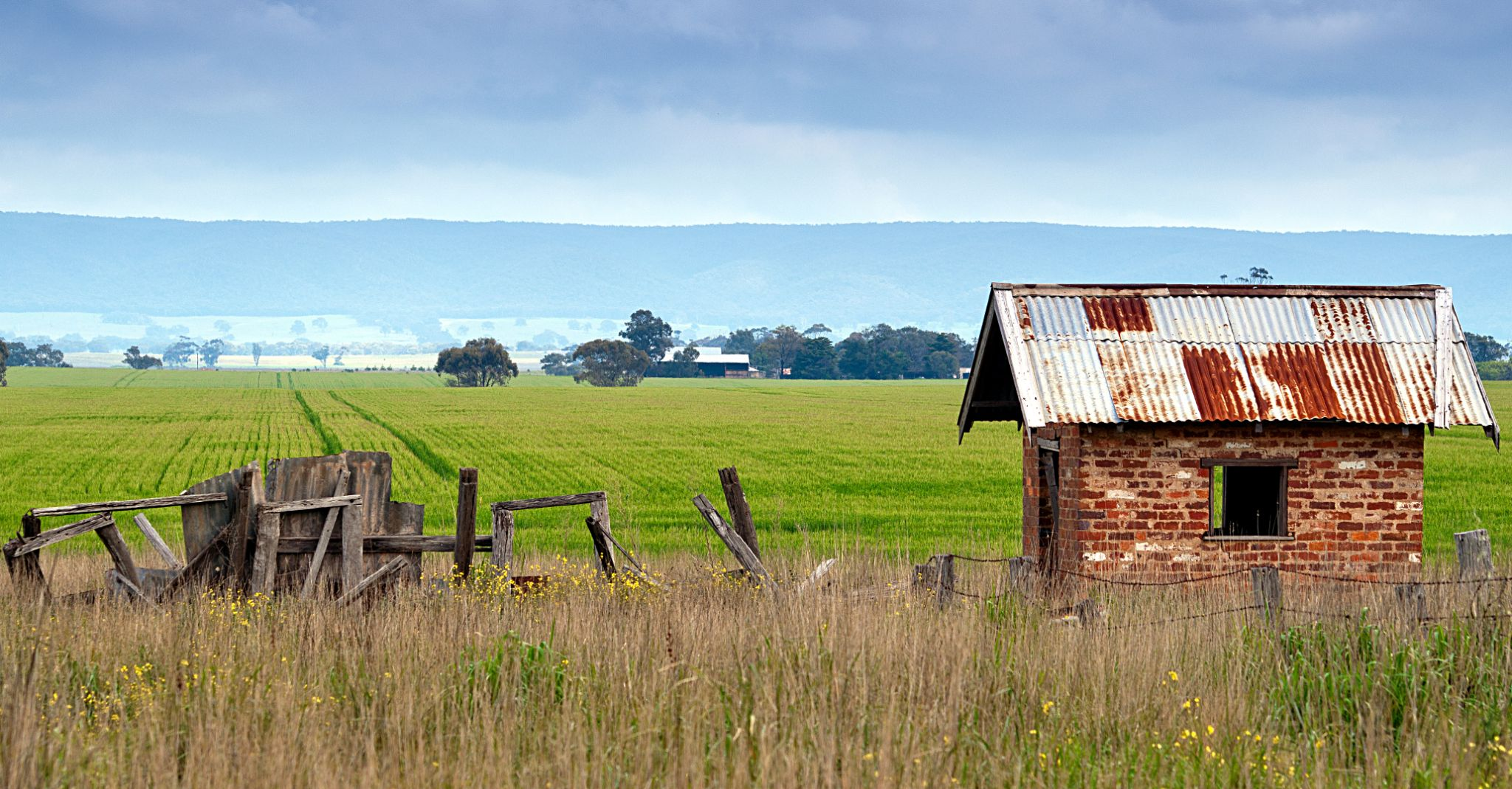 shed in Canola field spring by halfhand