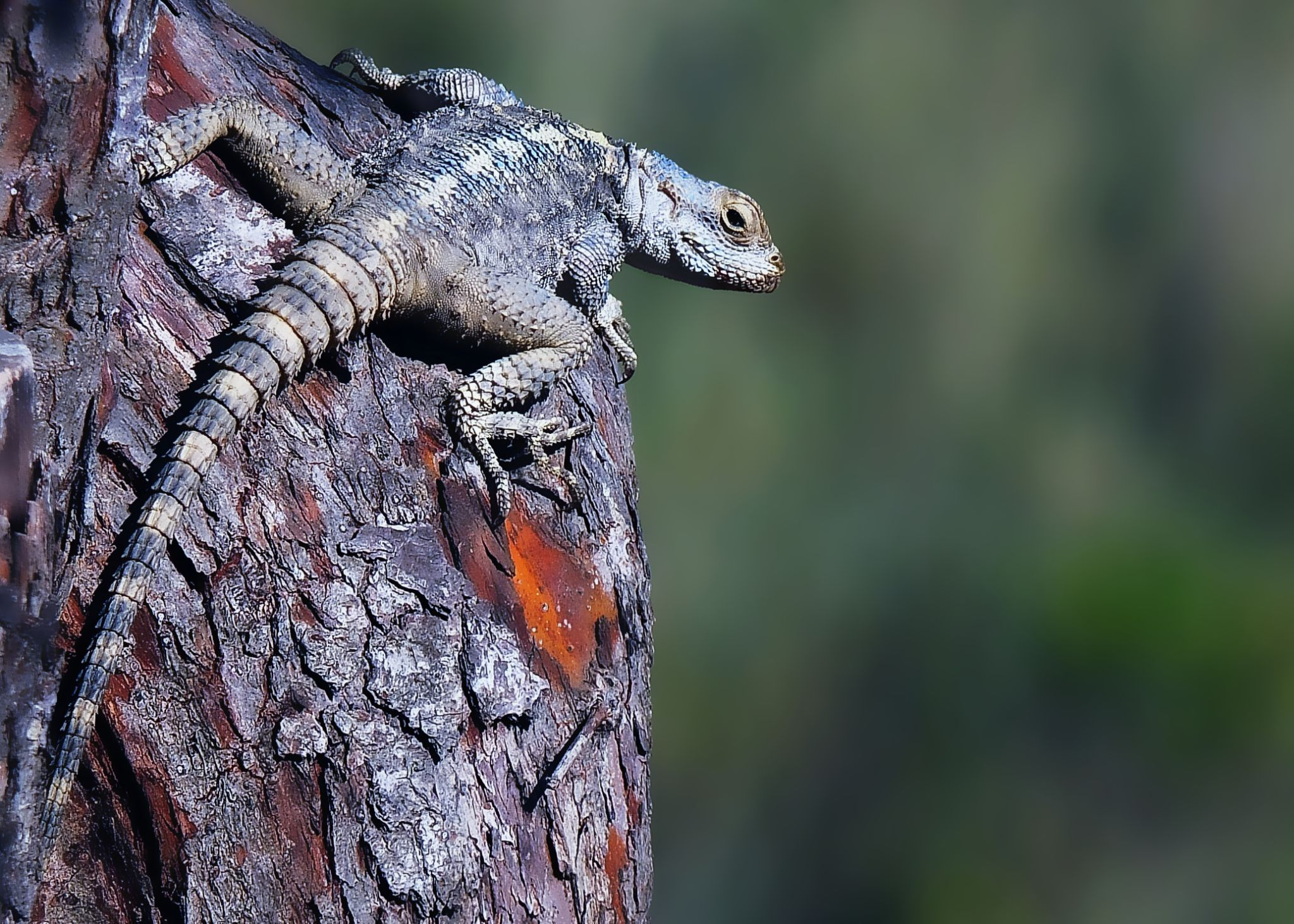 Salamander by kayhan.ozcicek