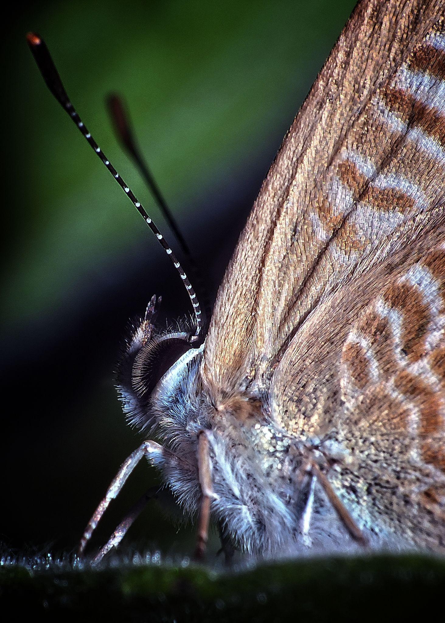 Butterfly Effect by kayhan.ozcicek