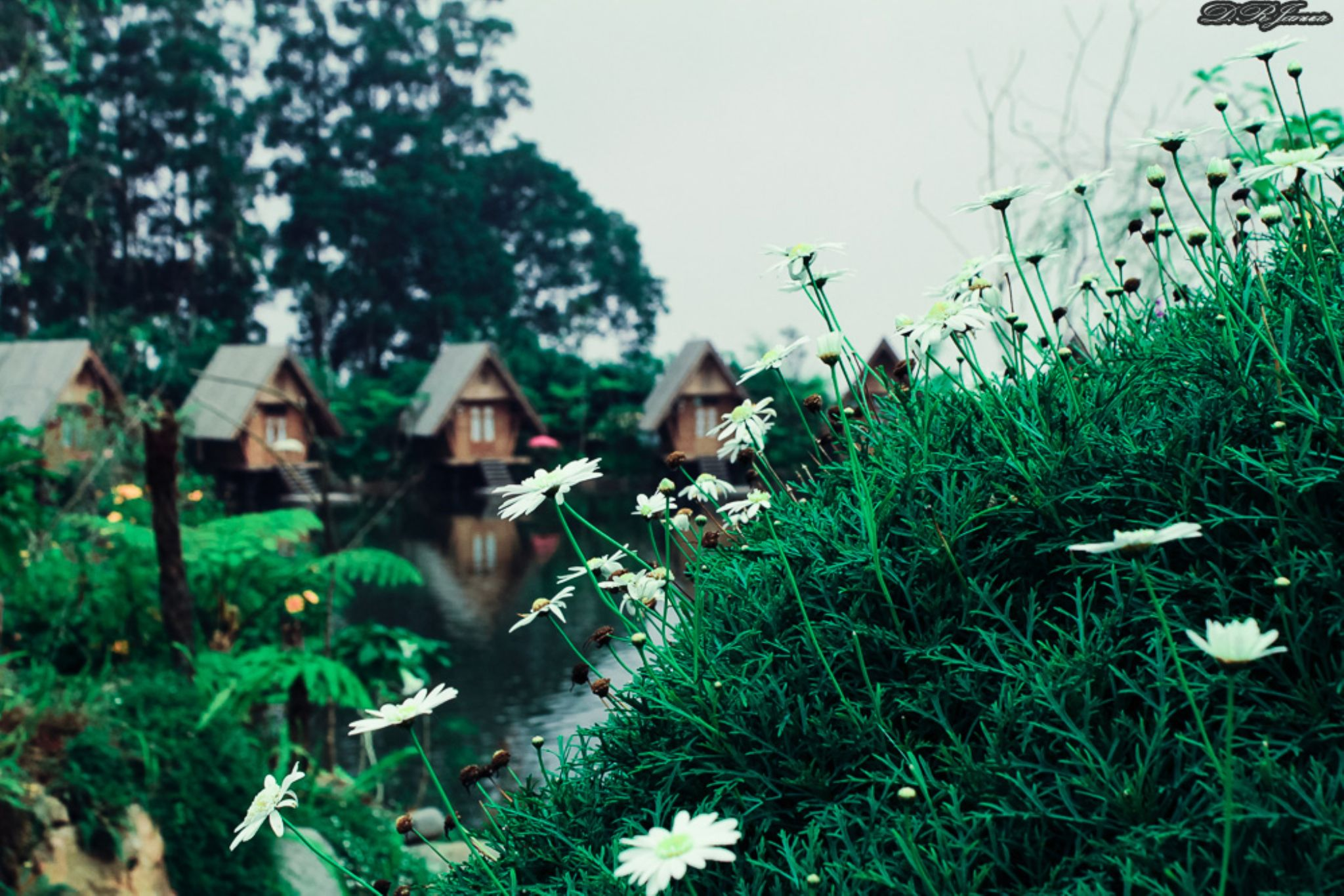 flower at dusun bambu Indonesia by erje61