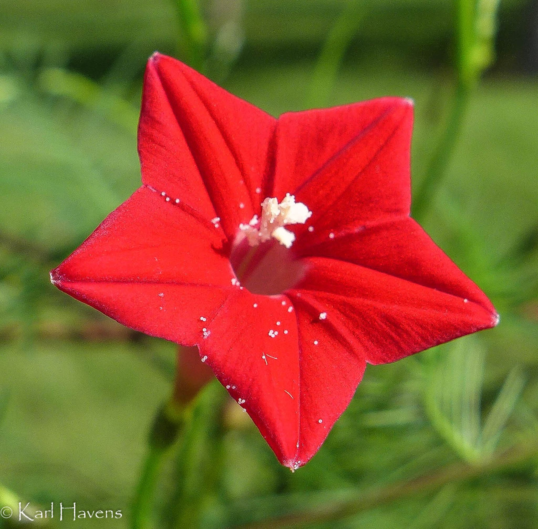 Red Star by karl.havens