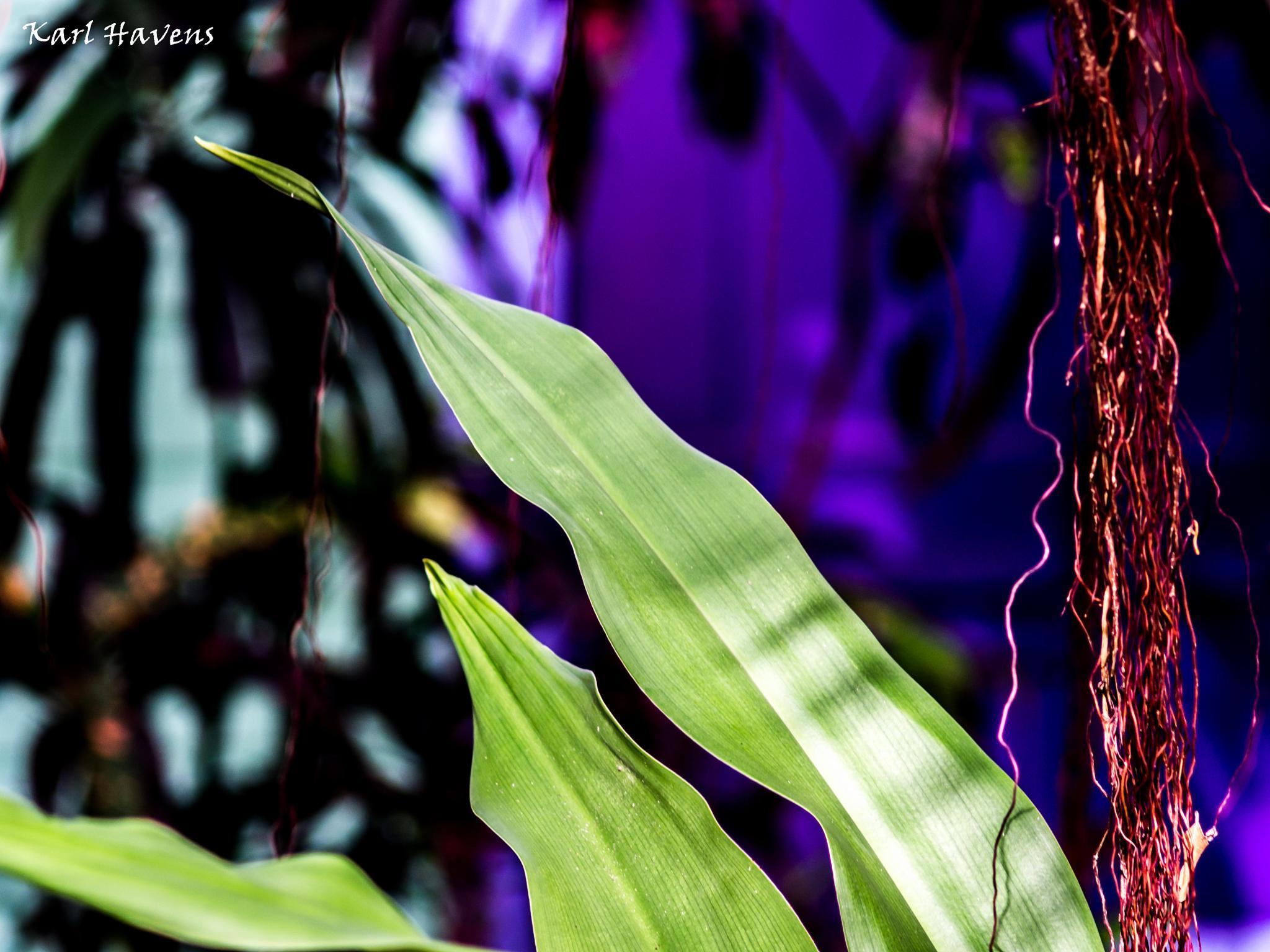 Tropiccal Bokeh by karl.havens