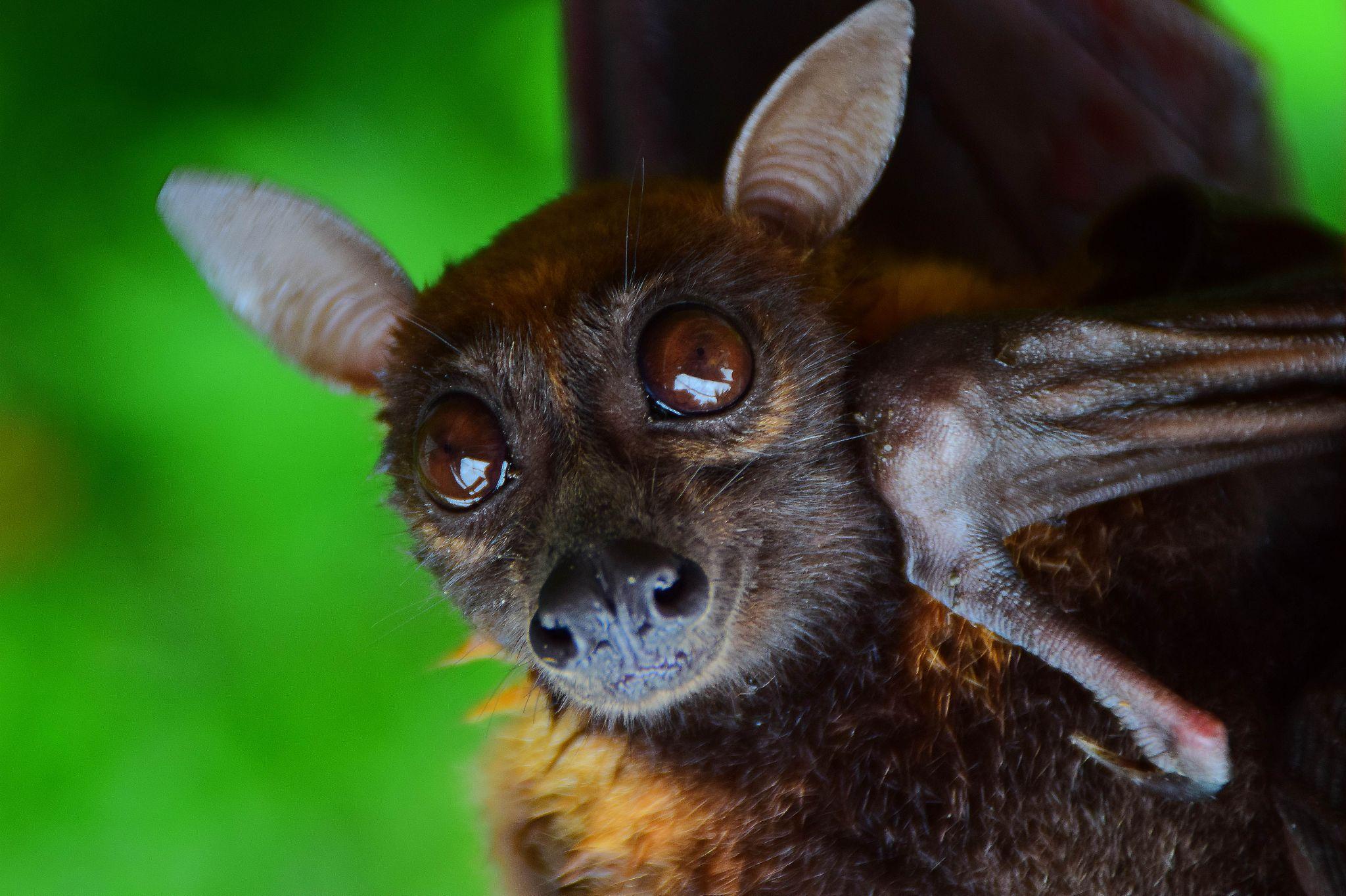 Bat by Lucky Matui