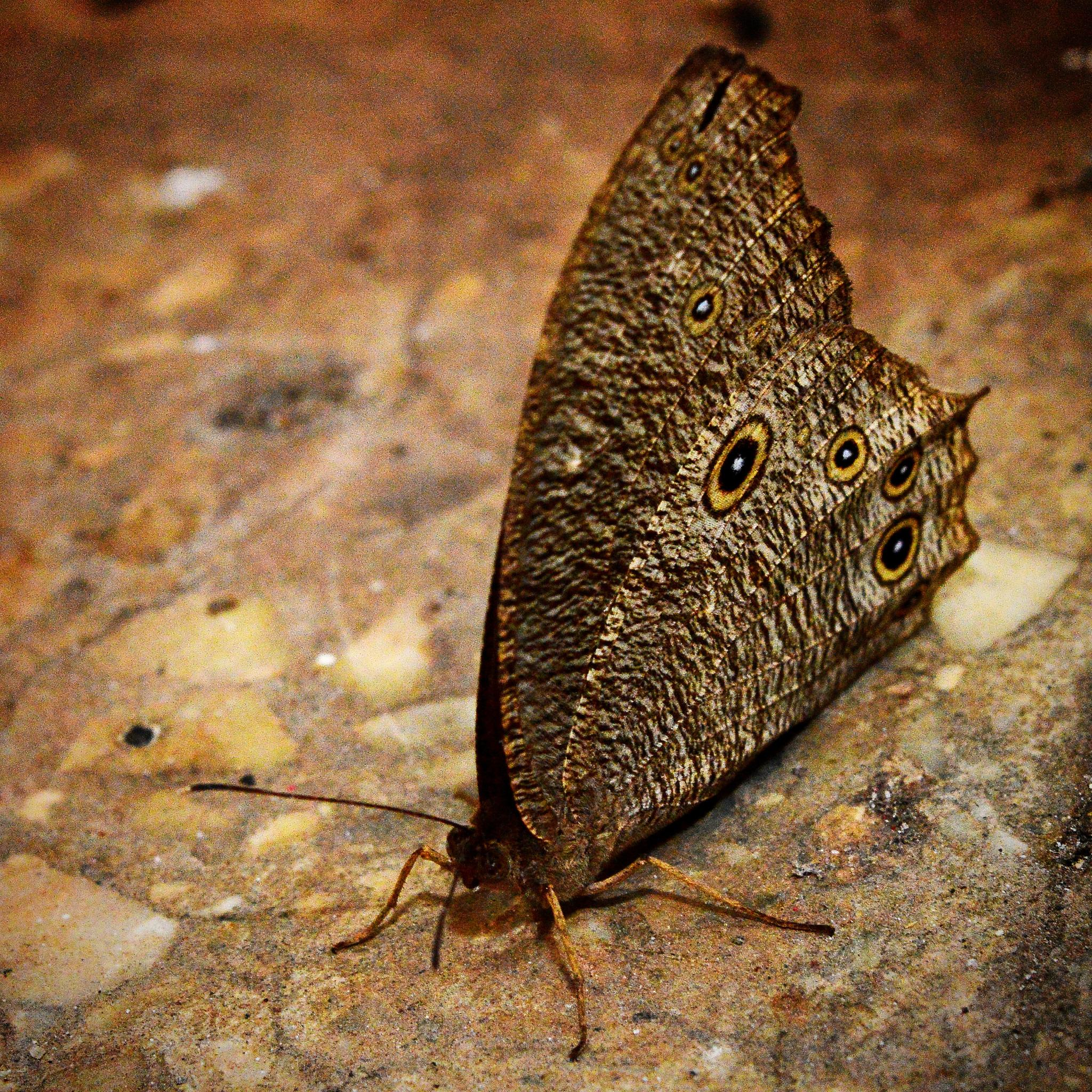 Butterfly  by manas.mali