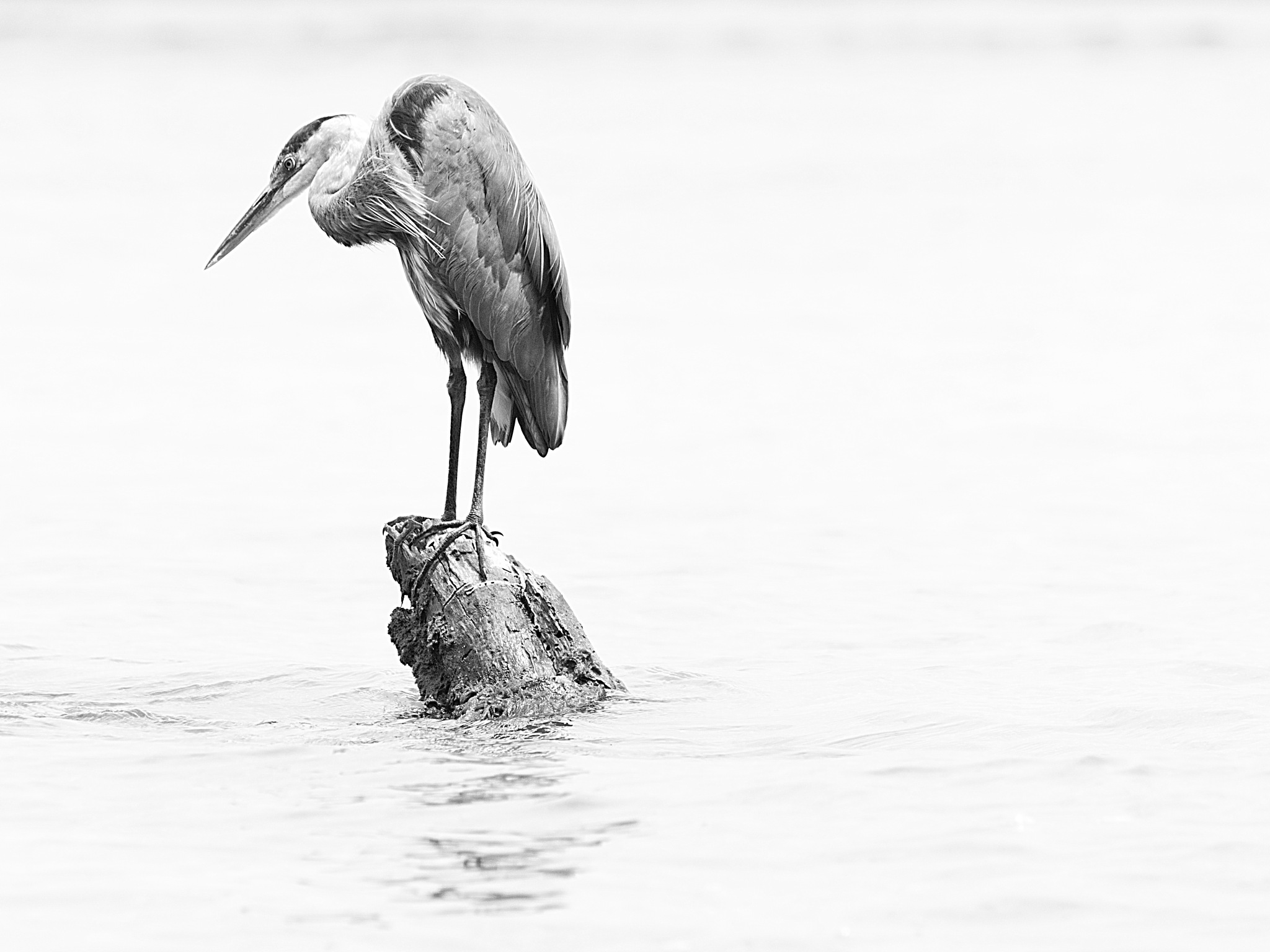 The heron by Marco Parenti