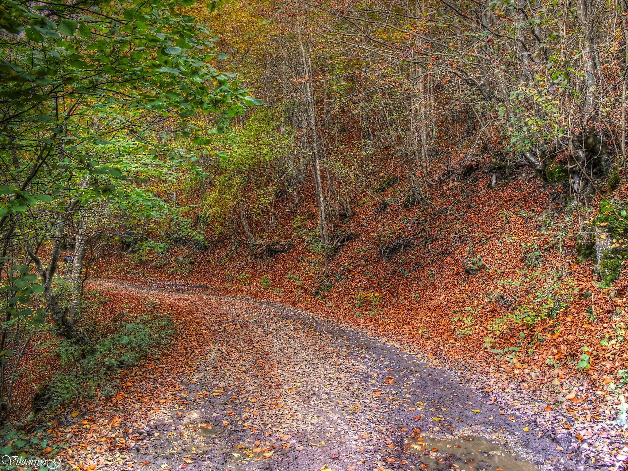 Autumn Landscape by Viktoriya Georgieva