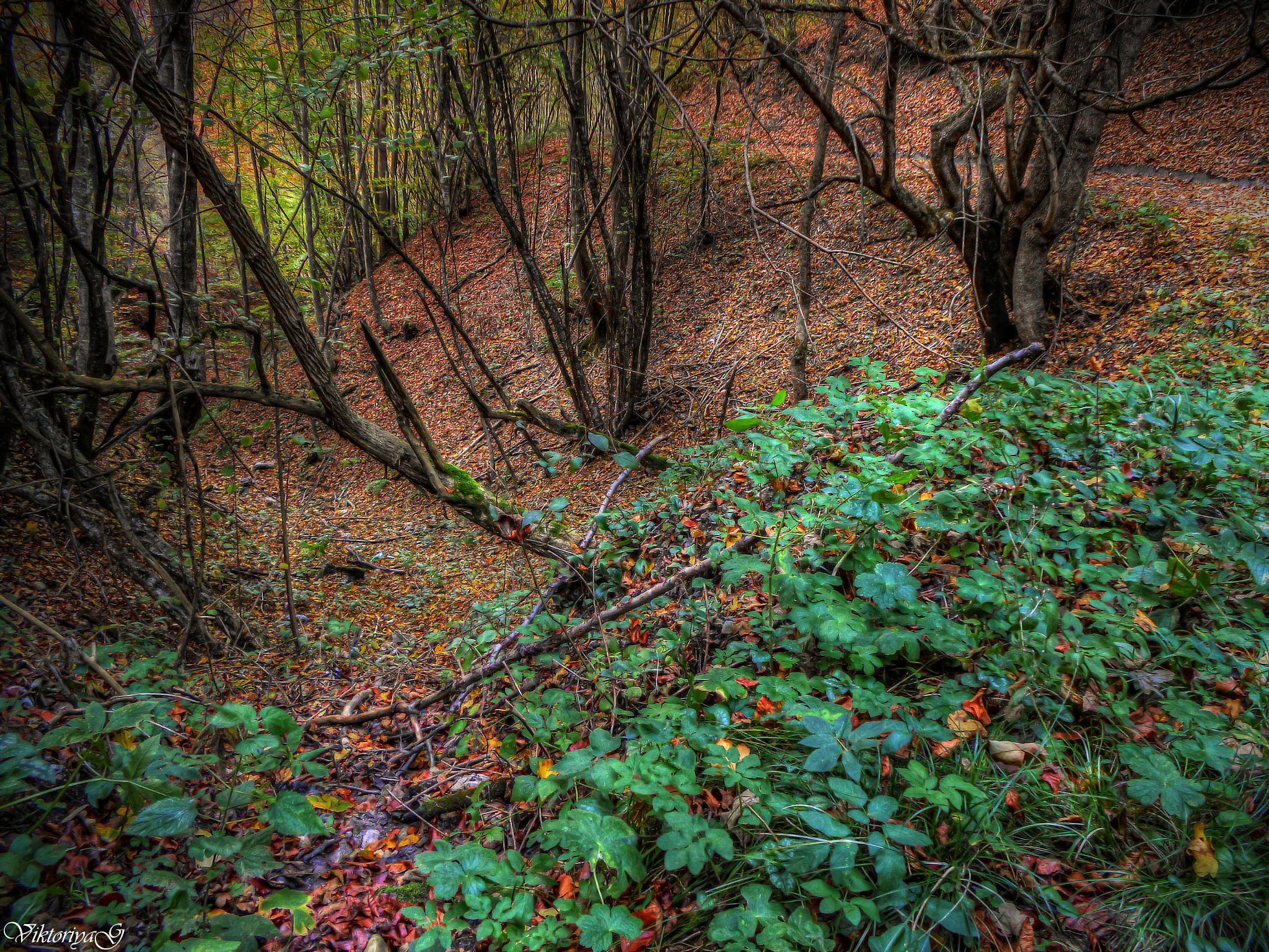 Autumn Fairy Tale by Viktoriya Georgieva