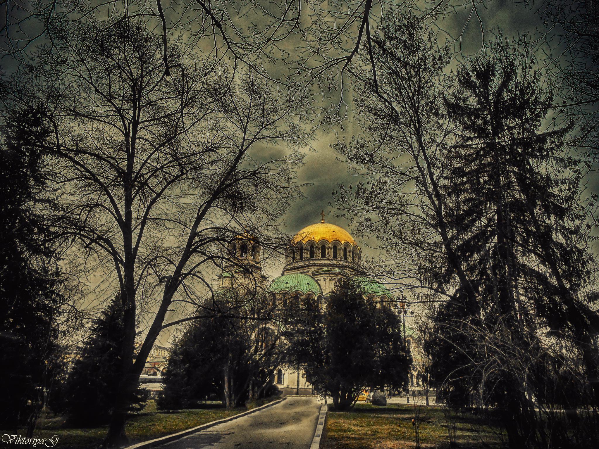 In the arms of trees by Viktoriya Georgieva