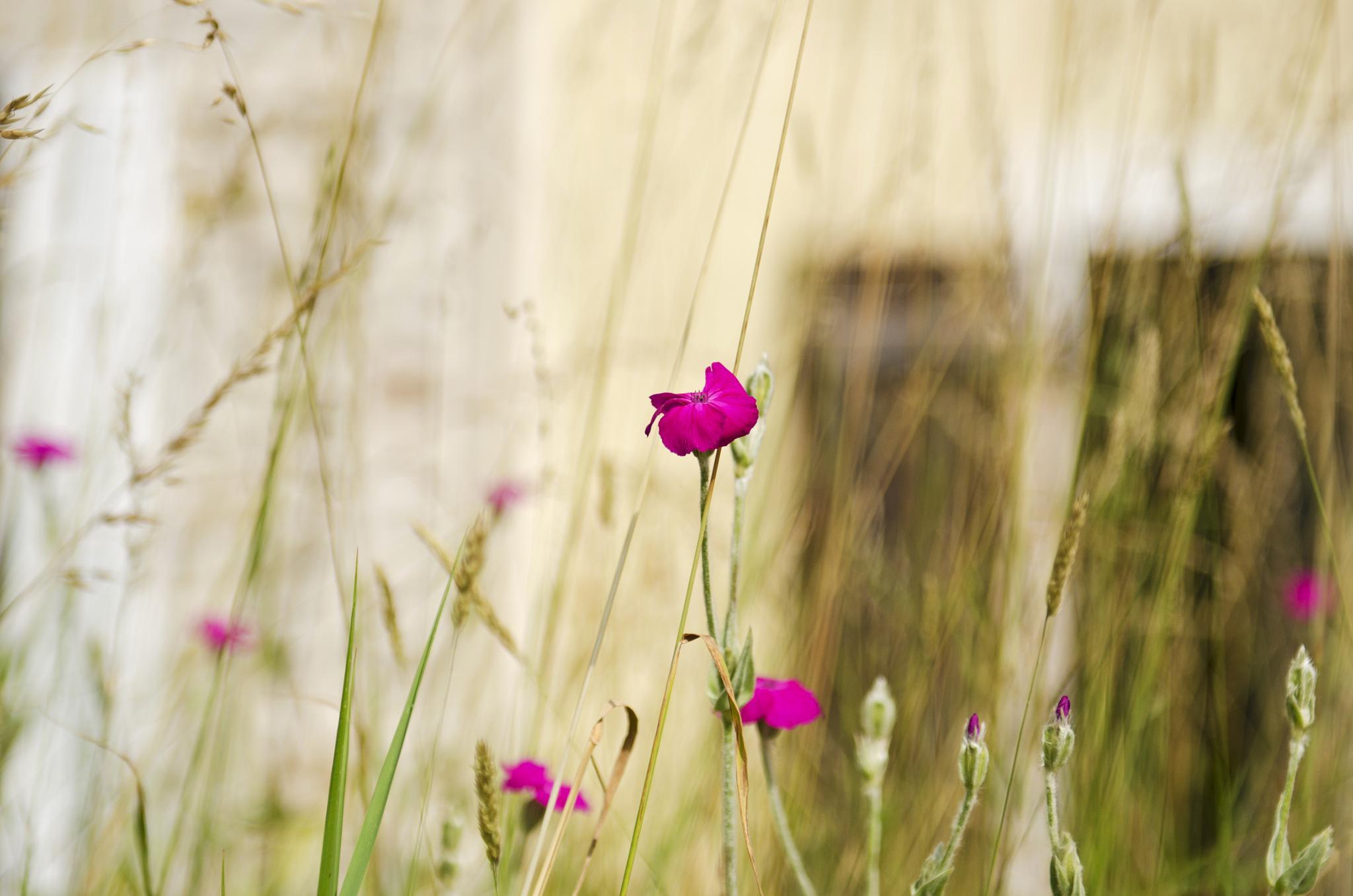 Littles flowers by Thierry Thévenet