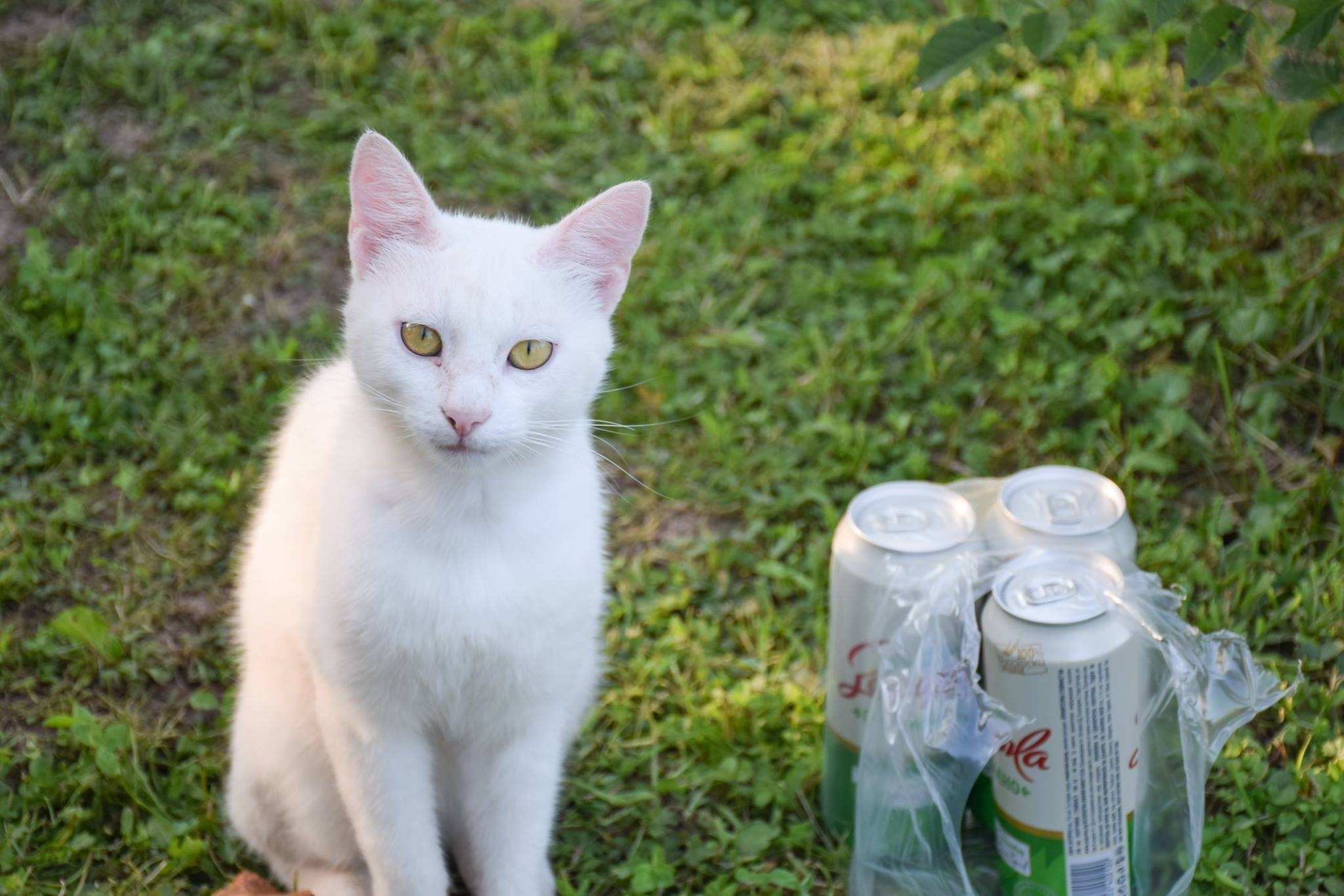 Cat drinks beer by MilchoPetrovMilev