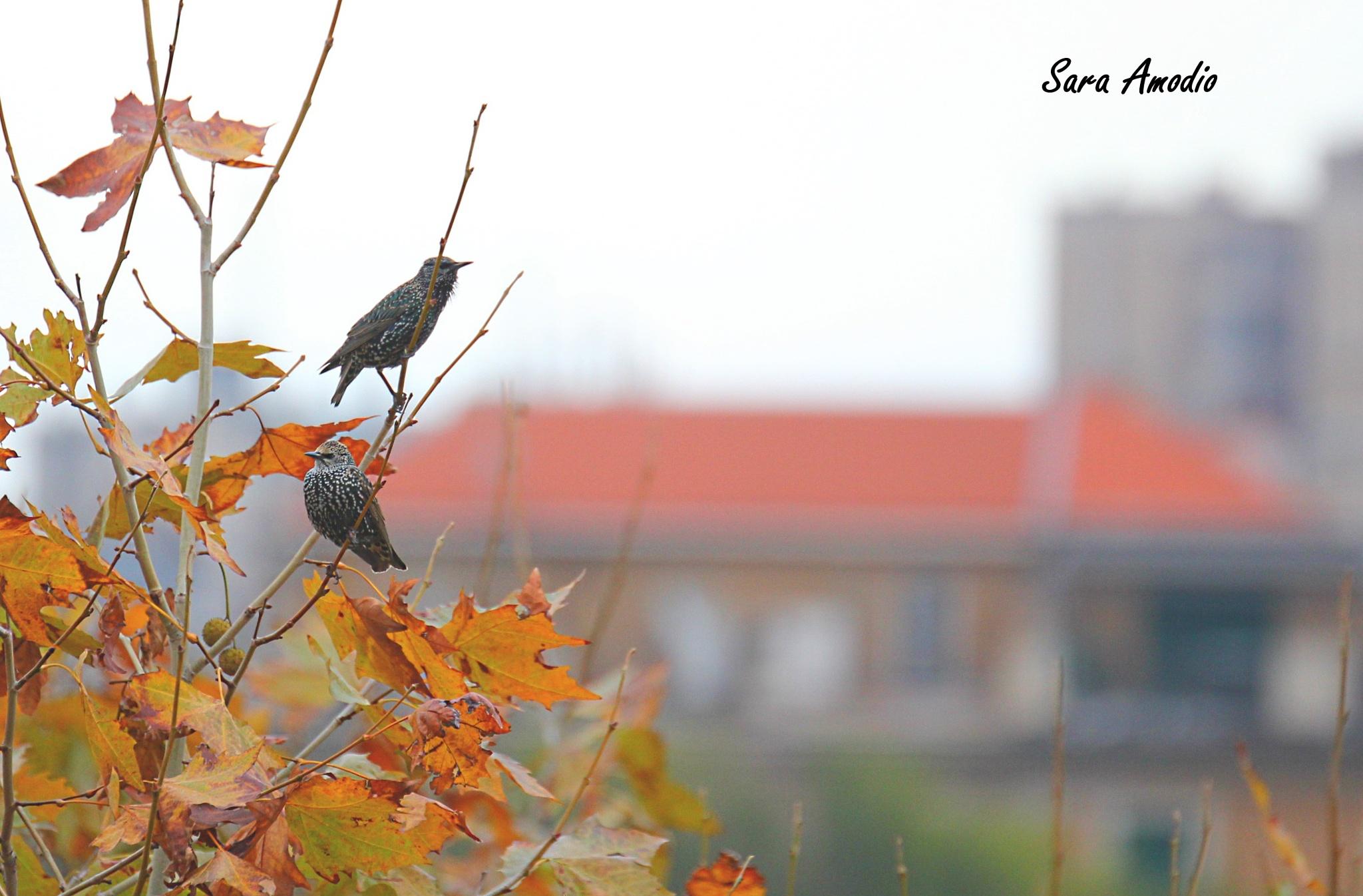 birds 1 by sara.amodio.77