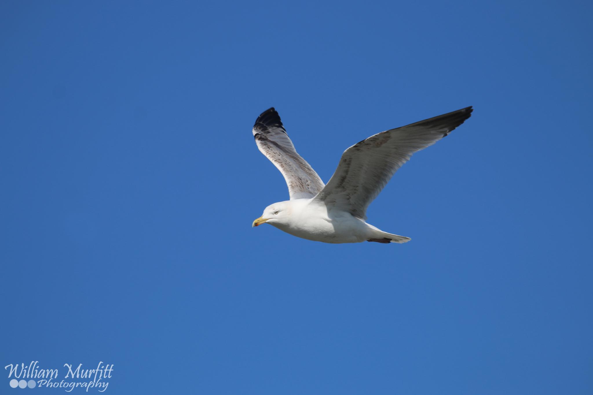 flap those wings by william.murfitt