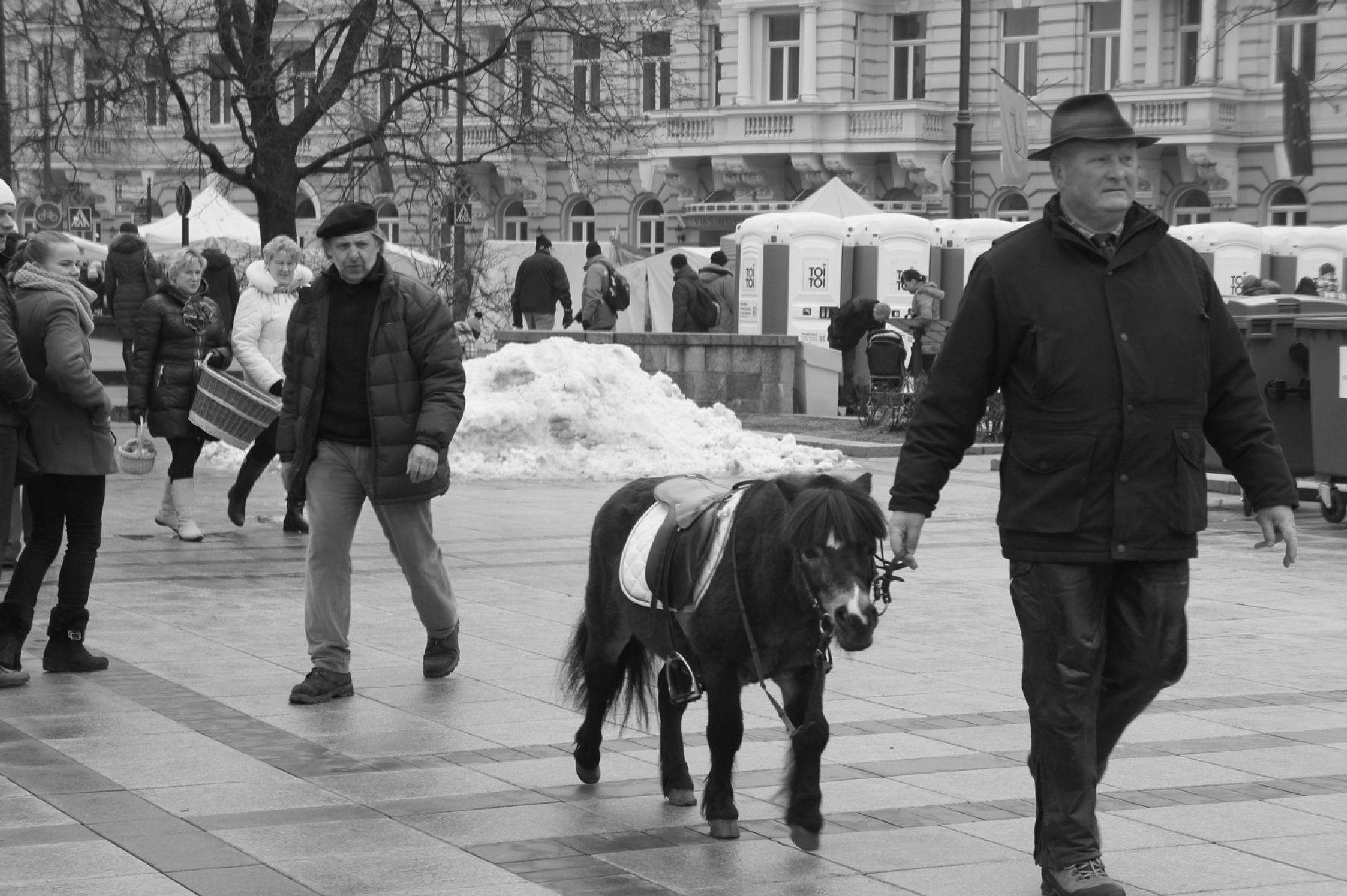 His lovely pet by tania.skaradek