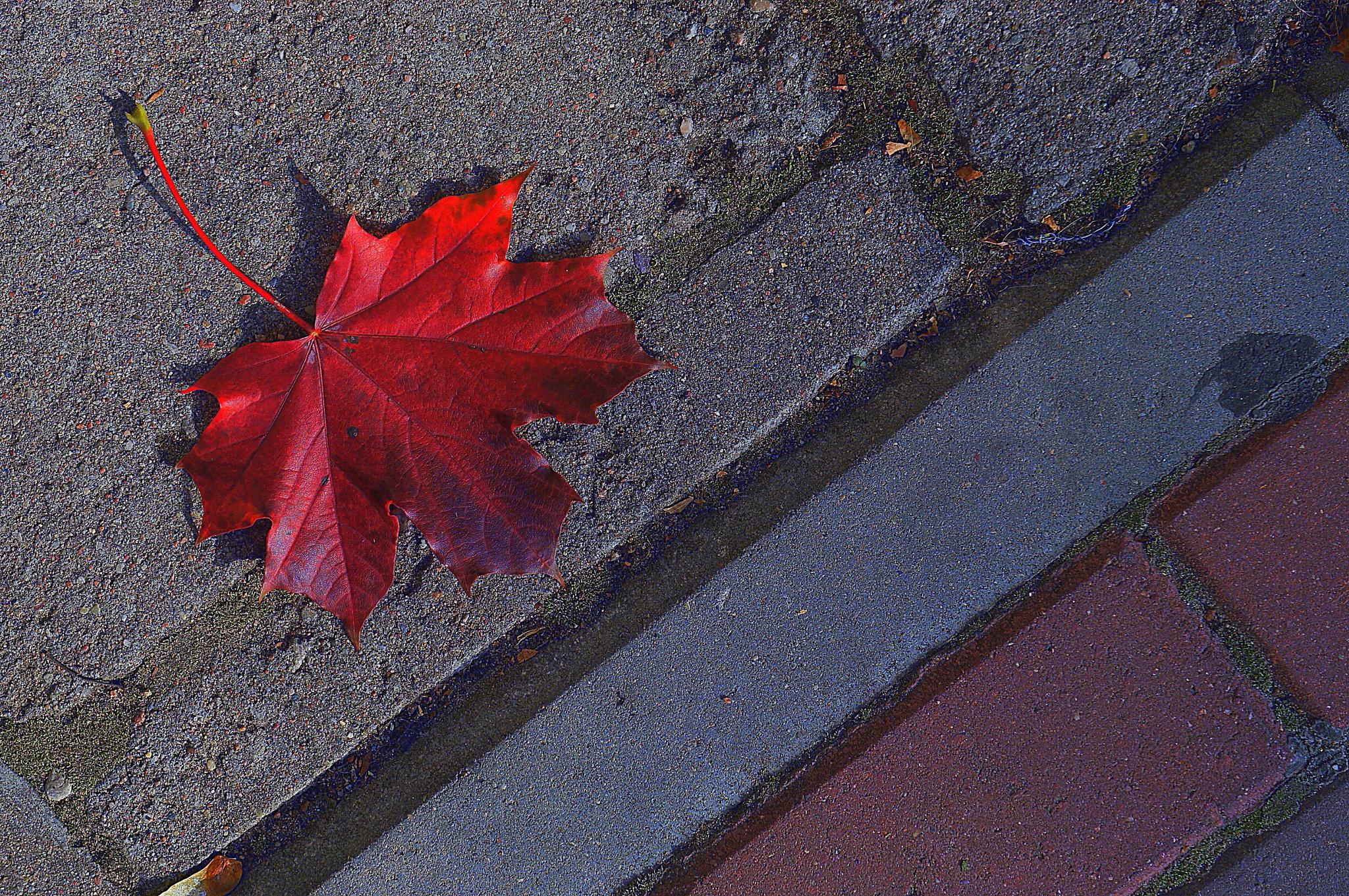 New Fall Collection by tania.skaradek